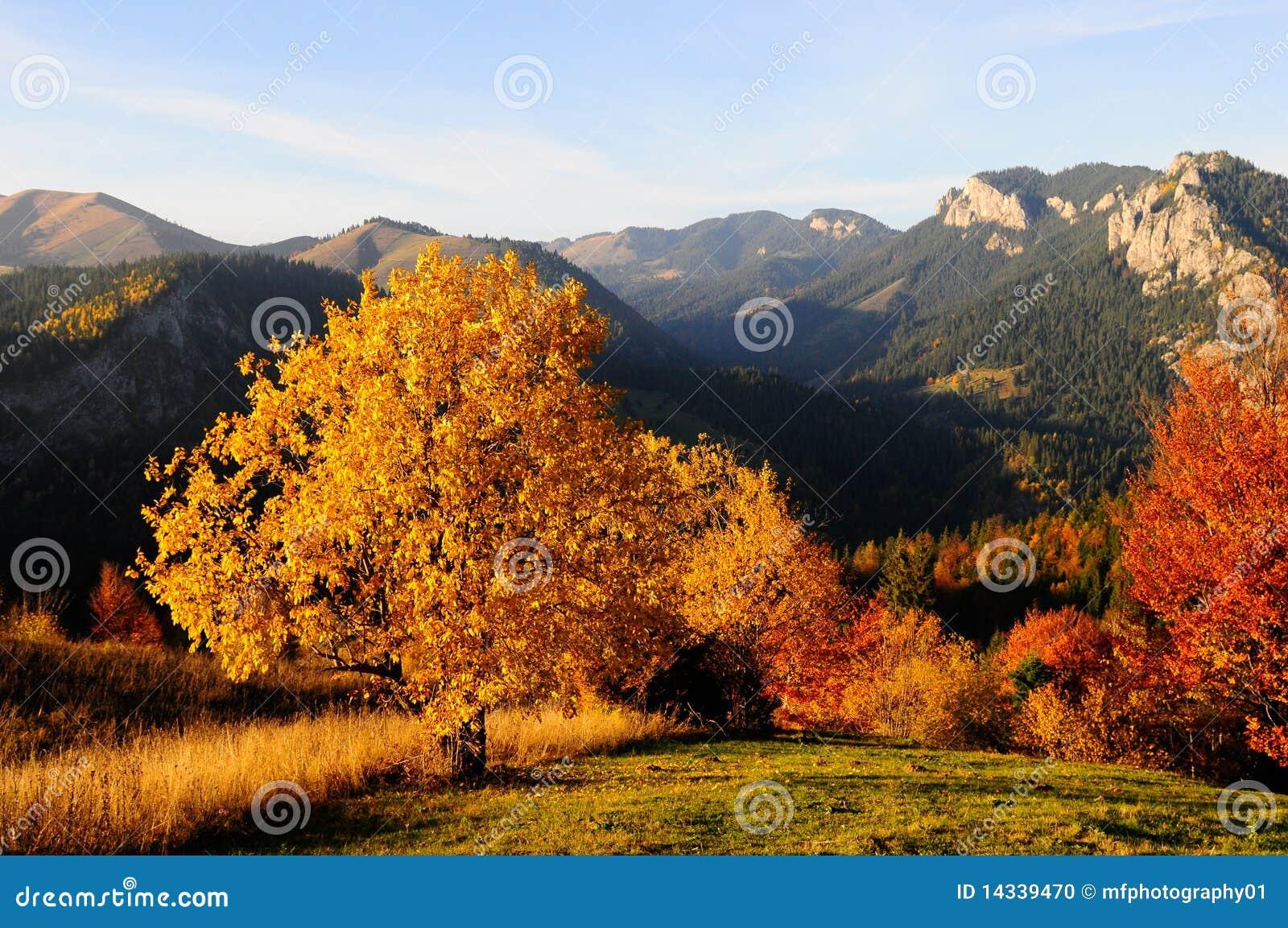 όψη φθινοπώρου