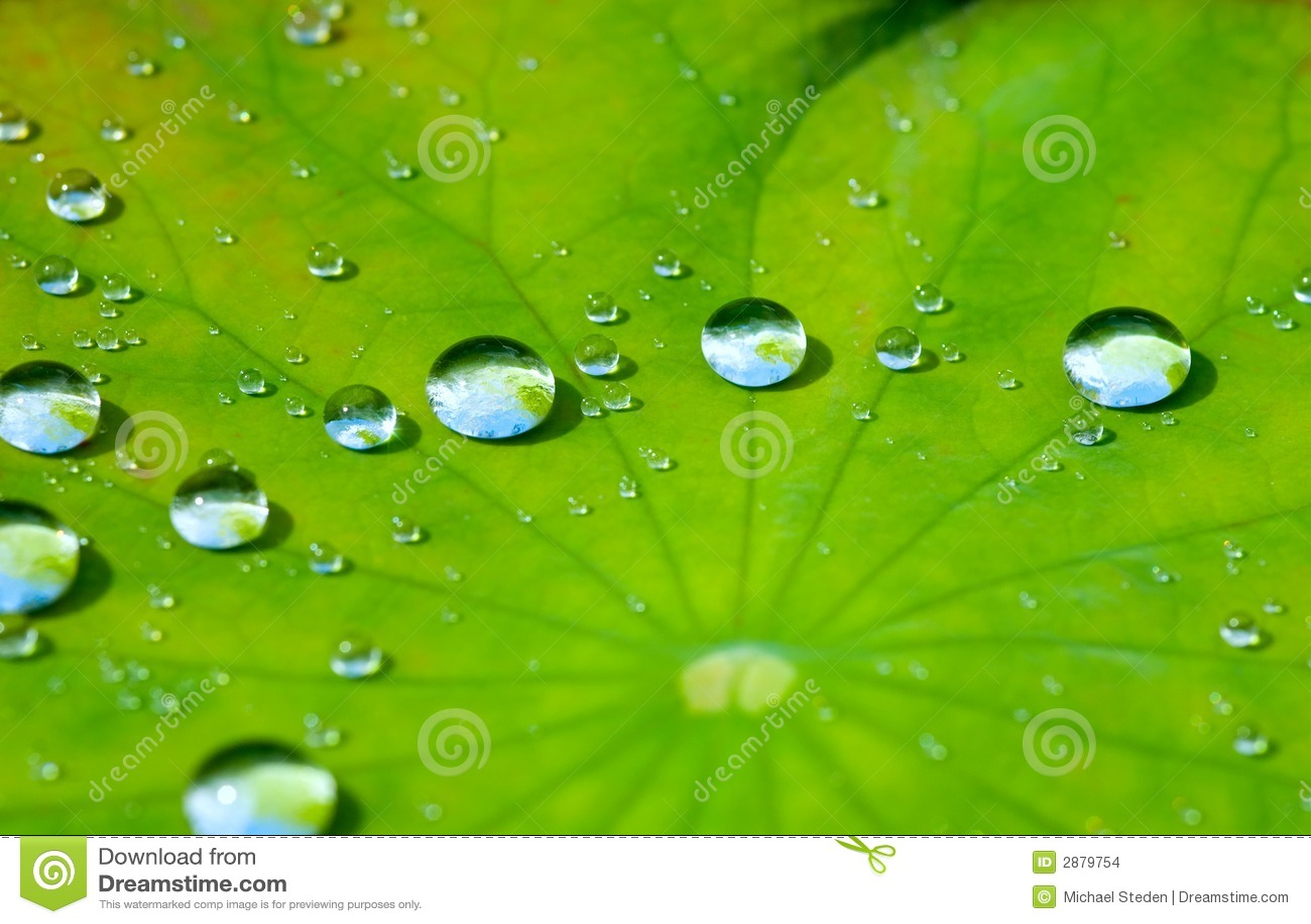 ύδωρ λωτού φύλλων απελε&upsilo