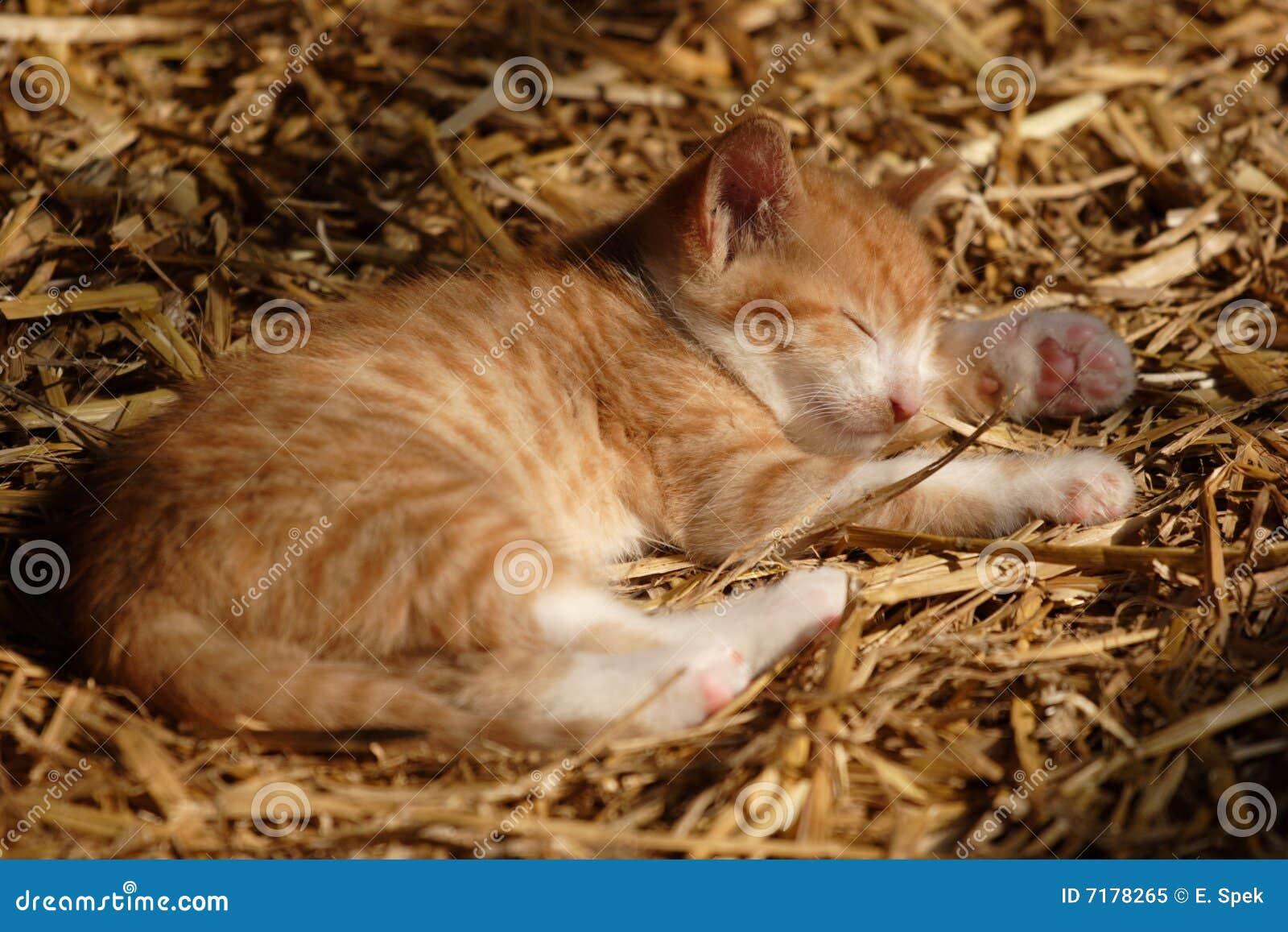 ύπνος γατακιών