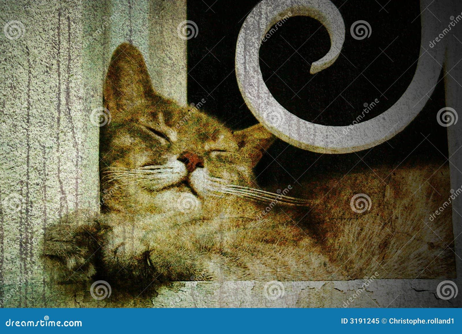 ύπνος γατών