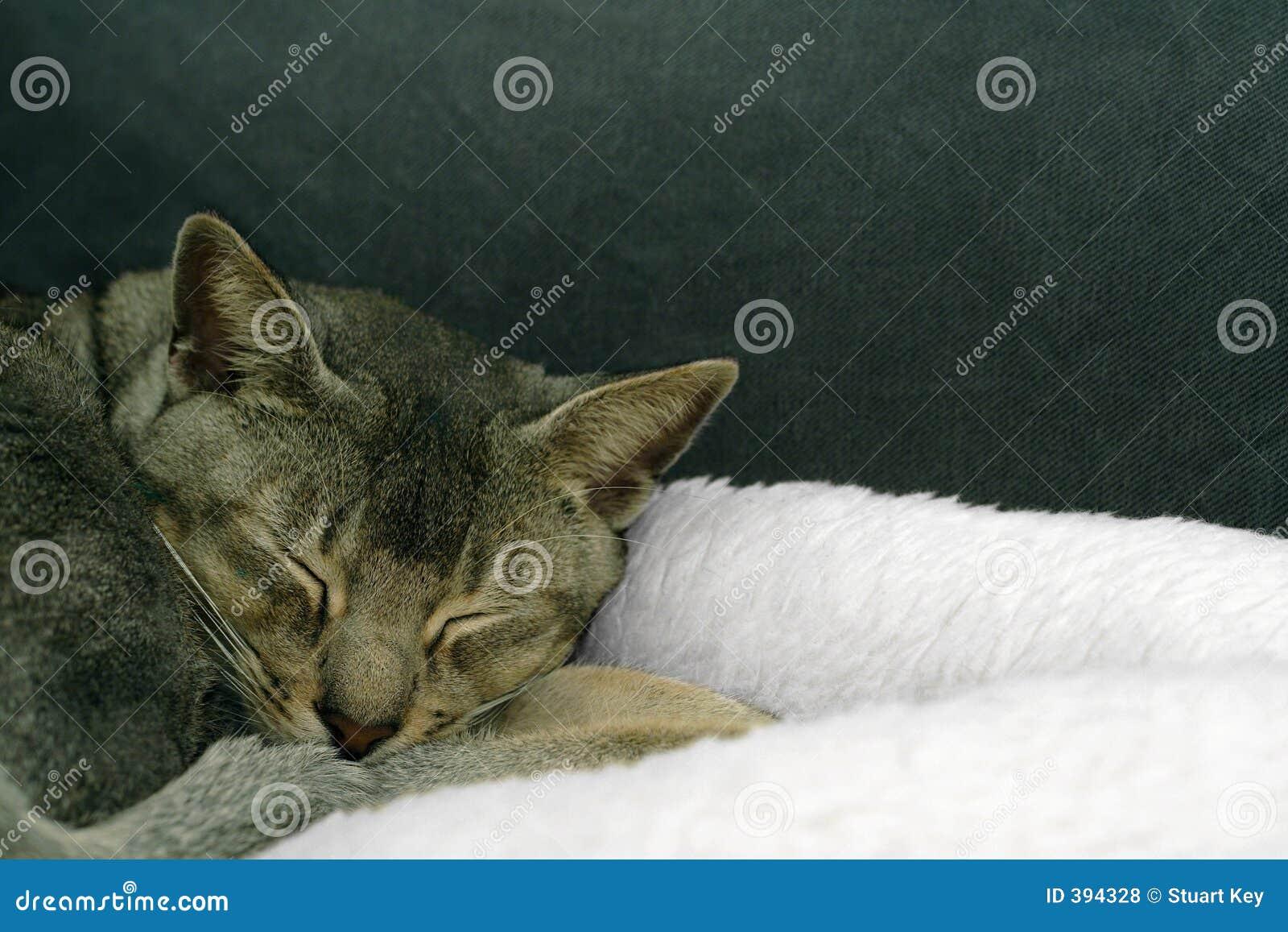 ύπνος ομορφιάς