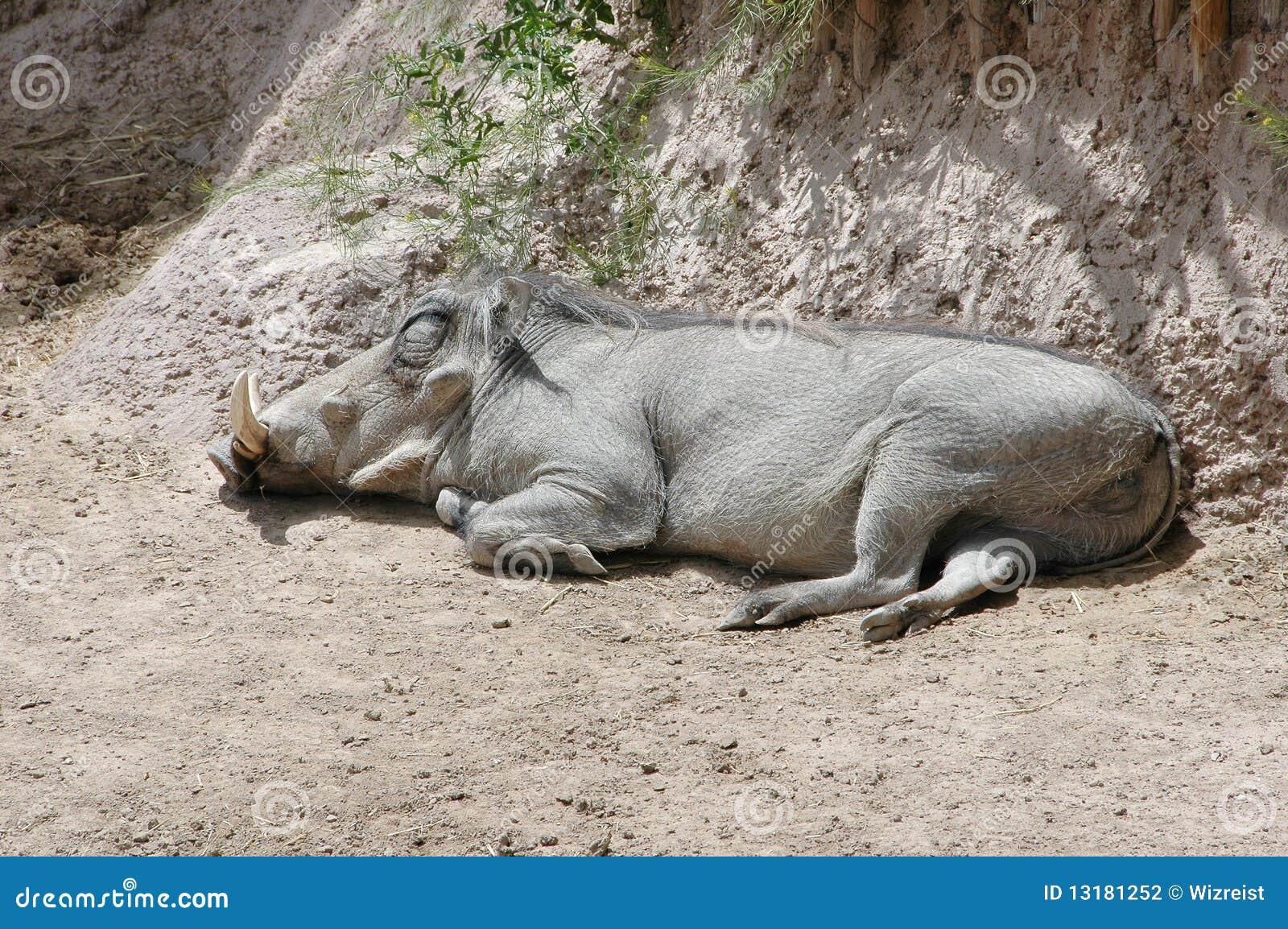 ύπνος warthog