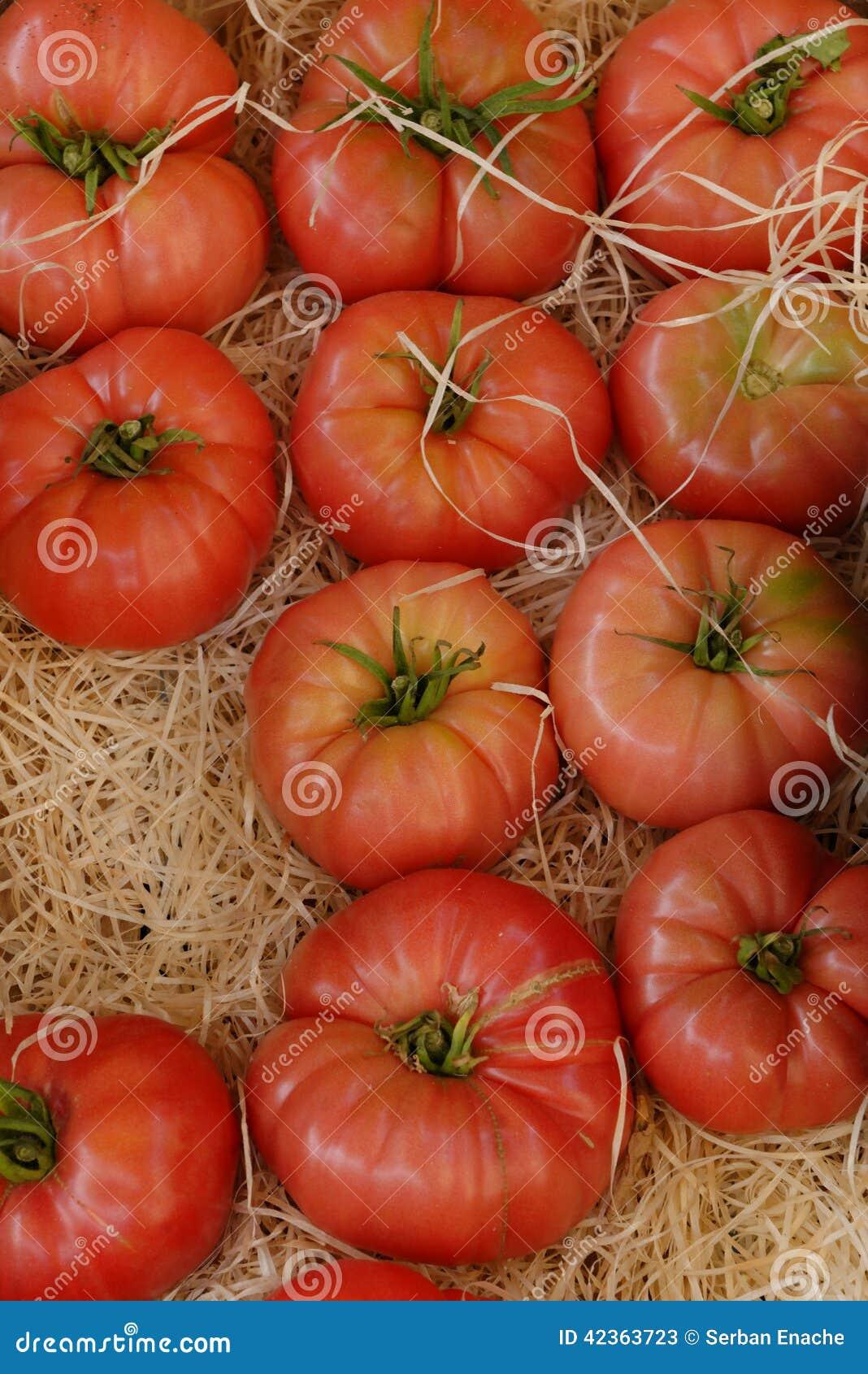 Ώριμες ντομάτες