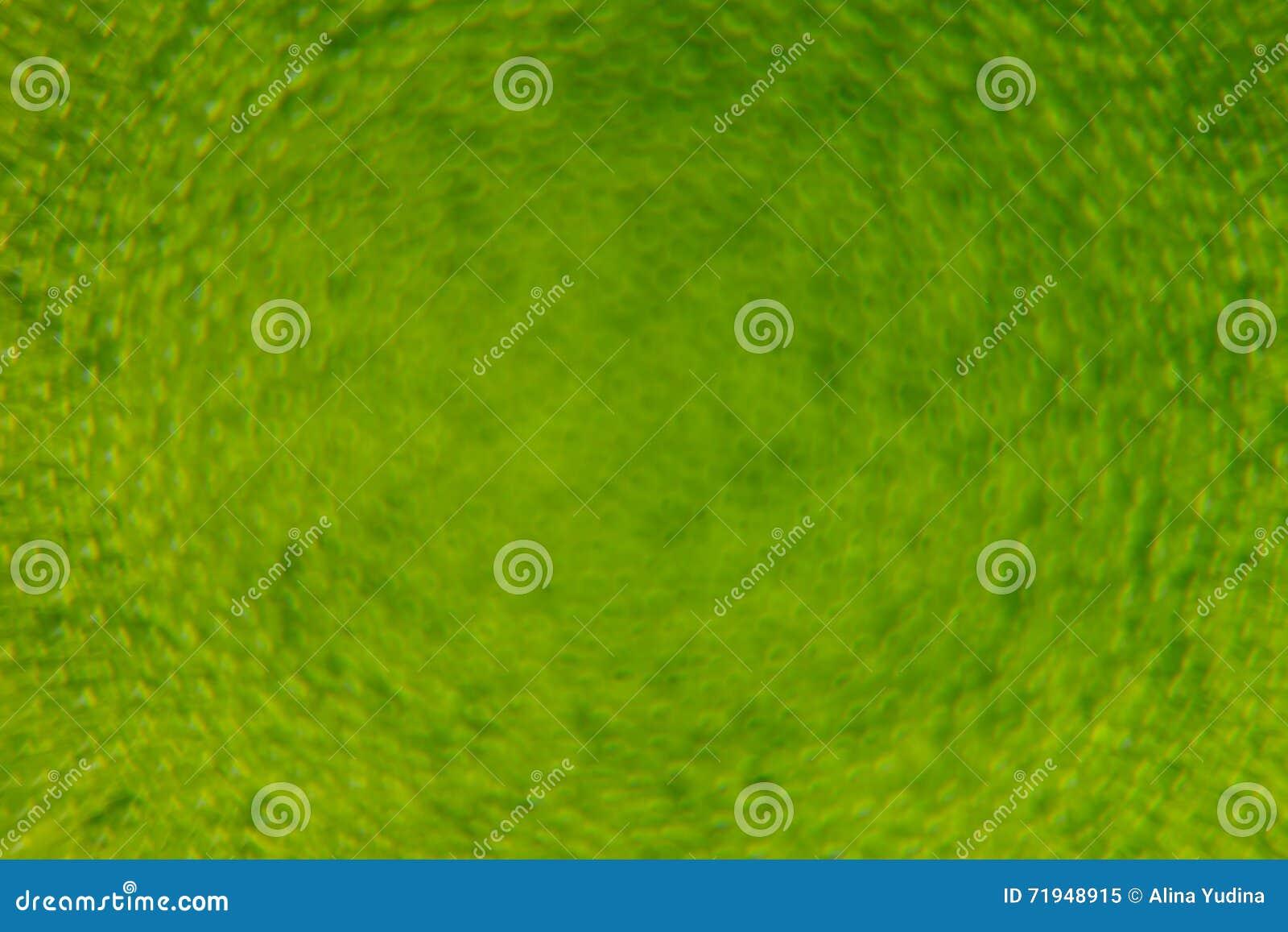 Абстрактная яркая ая-зелен предпосылка весны с нерезкостью и sparkles желтый цвет весны лужка одуванчиков предпосылки полный Пред
