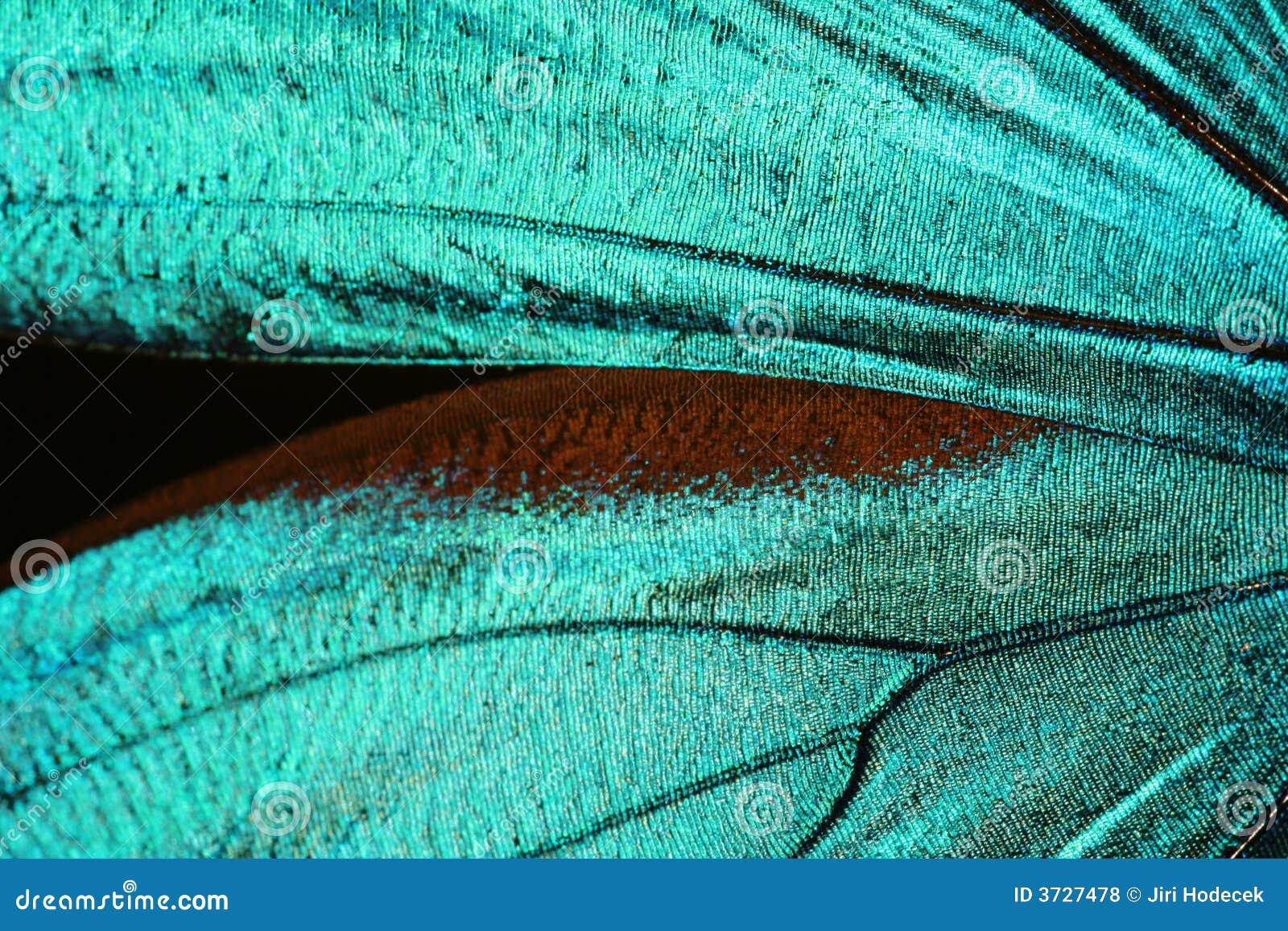 абстрактное крыло текстуры бабочки