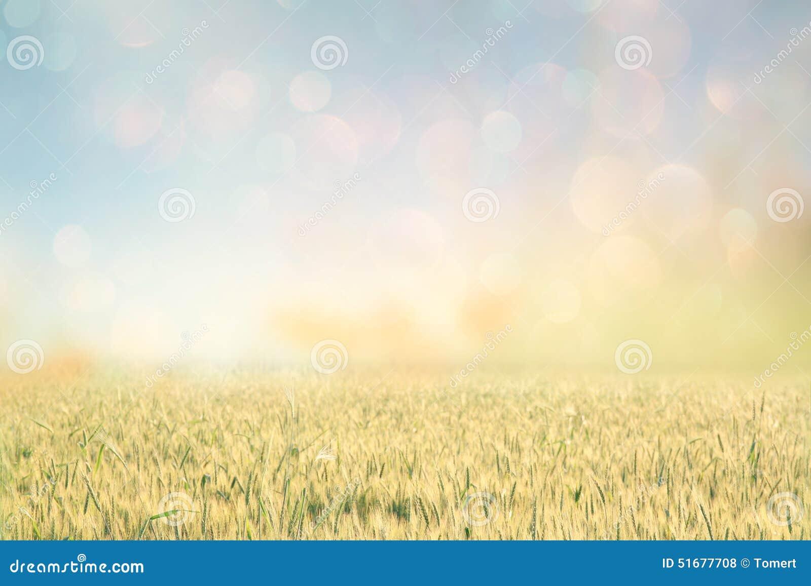 Абстрактное фото пшеничного поля и яркого неба Влияние Instagram