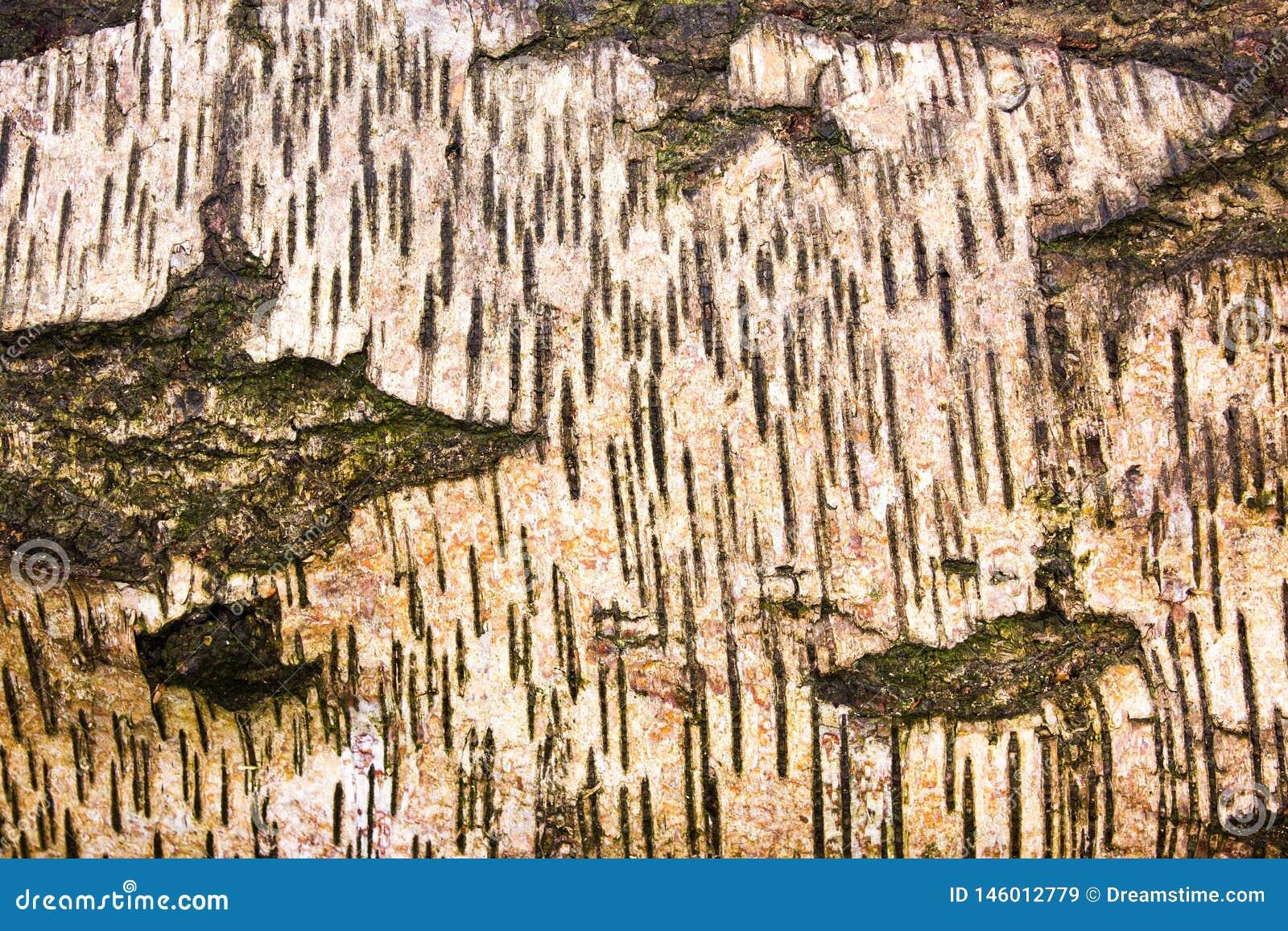 Абстрактные картины в природе