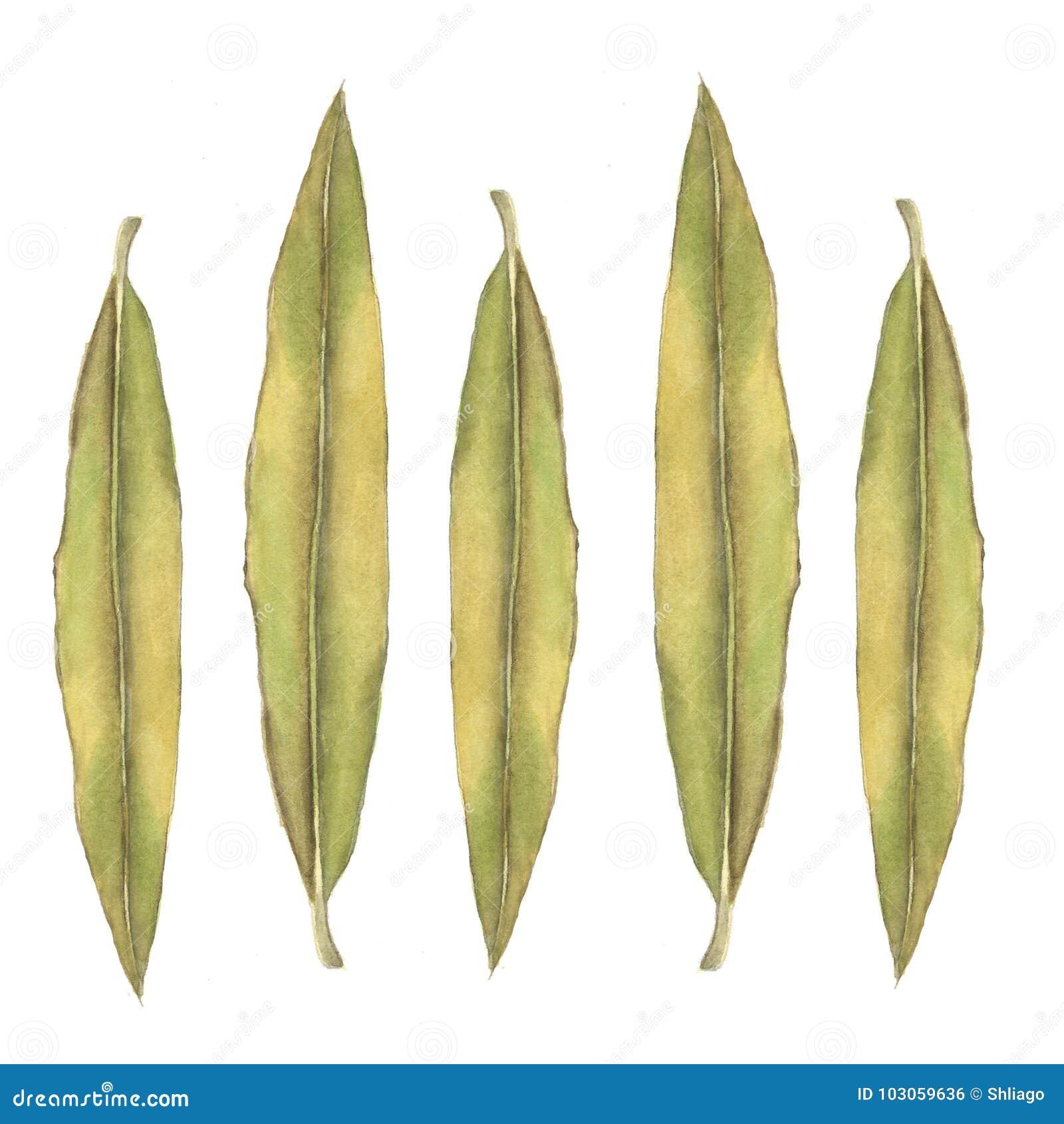 Абстрактные листья олеандра акварели на белизне Смогите быть использовано для интернет-страниц, стиля идентичности, печатания, пр