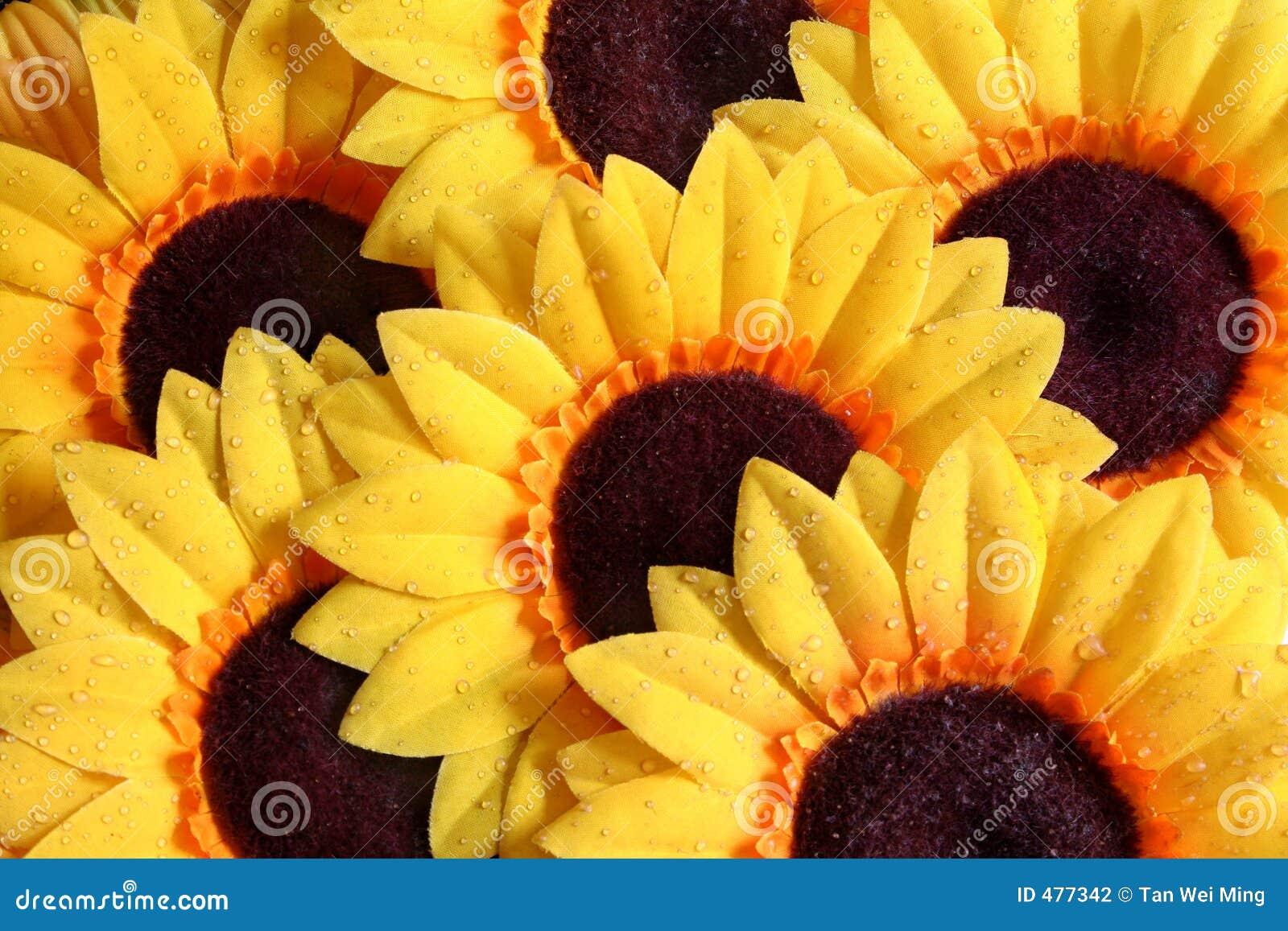 абстрактный солнцецвет