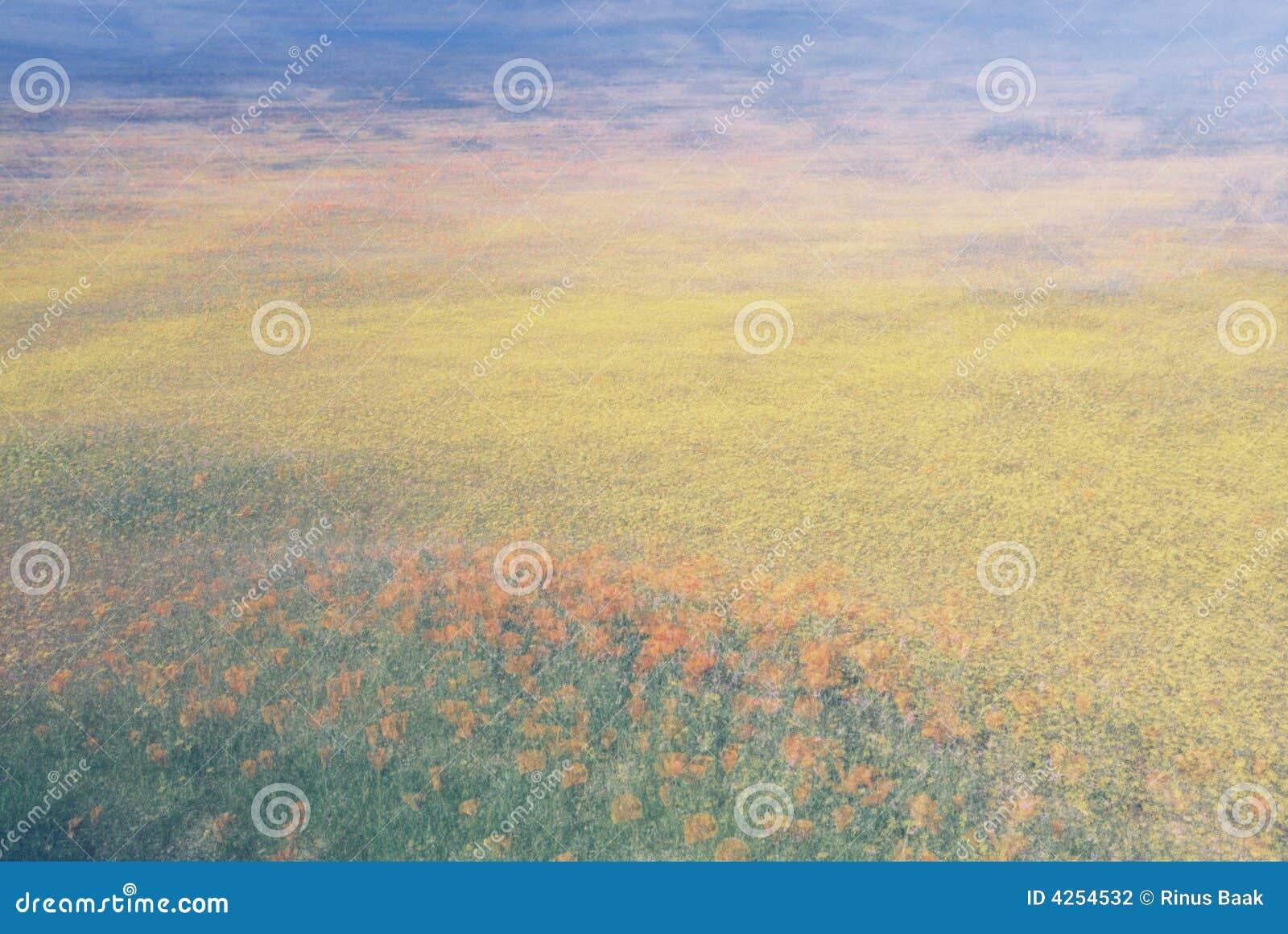 абстрактный цветок поля