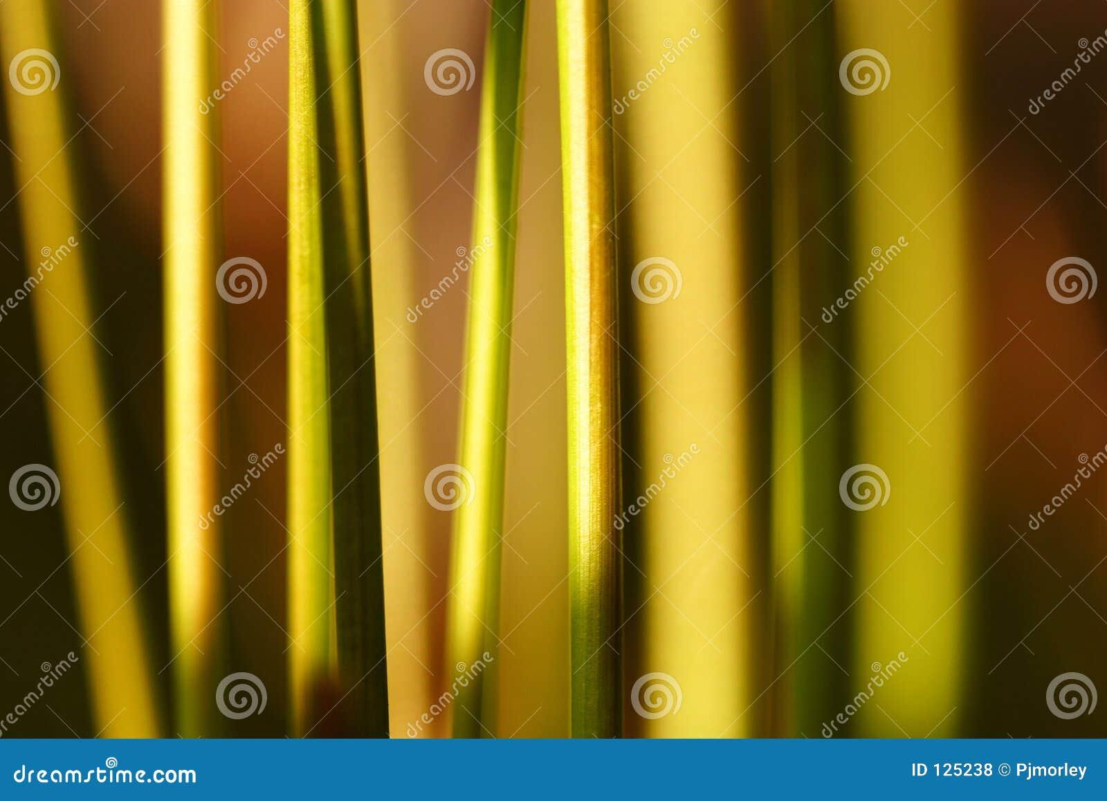 абстрактный tor травы