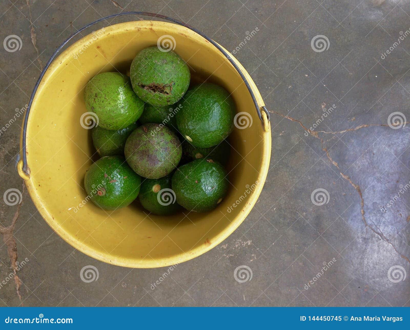 Авокадоы в желтом ведре с серой предпосылкой