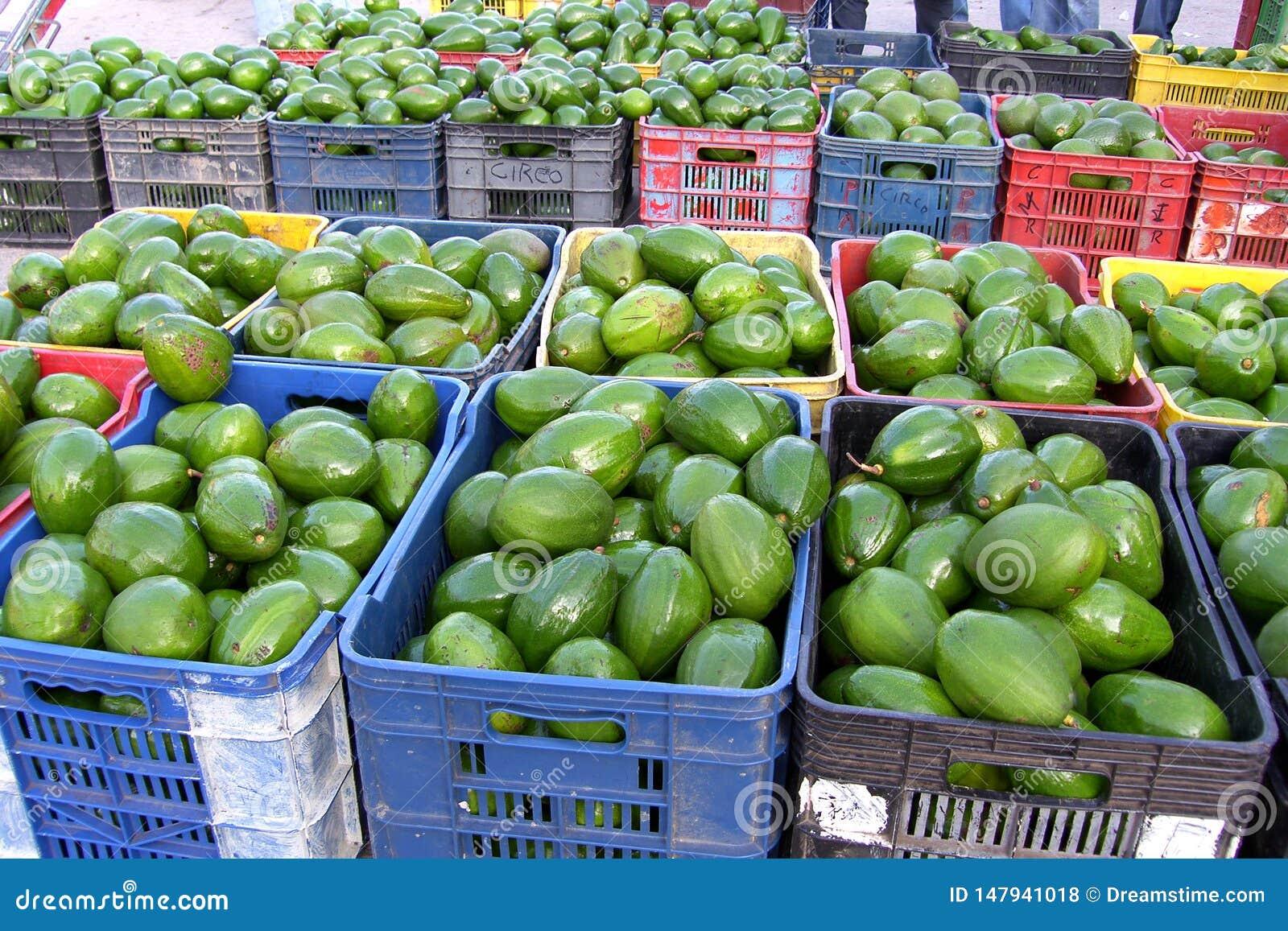 Авокадоы в рынке
