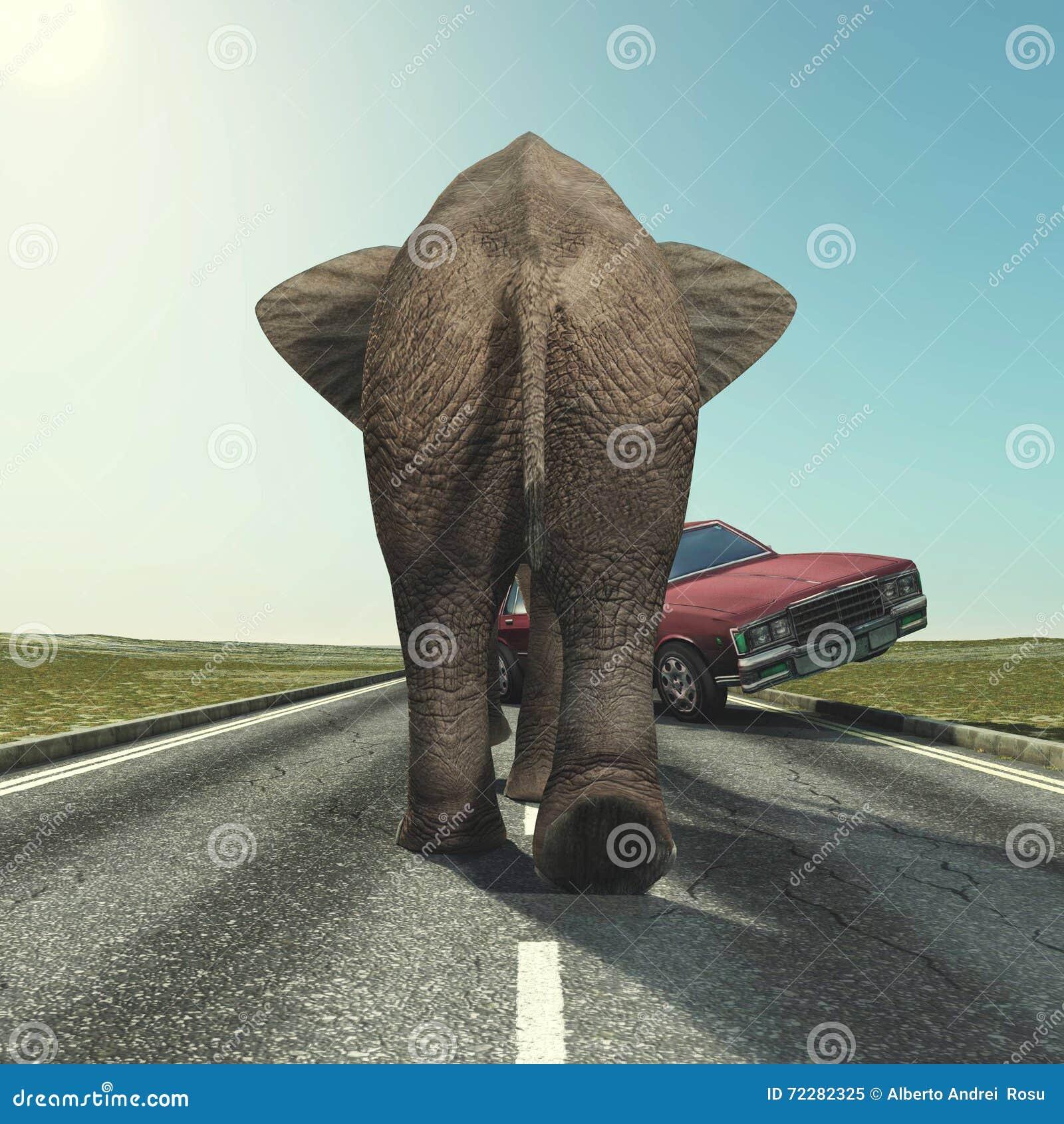 Download Автомобиль и слон иллюстрация штока. иллюстрации насчитывающей национально - 72282325
