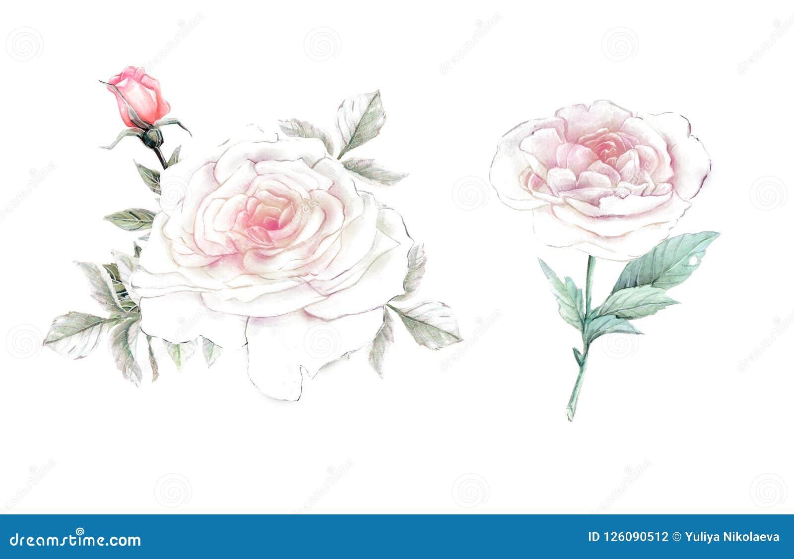 автор цветет акварель изображения картины I флористические иллюстрация, лист и бутоны Ботанический состав для поздравительной отк