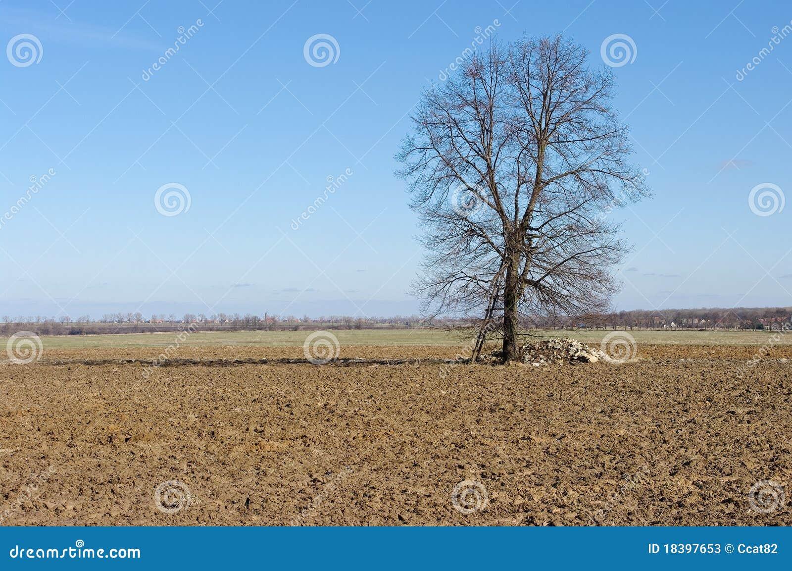 аграрное поле вспахало взгляд