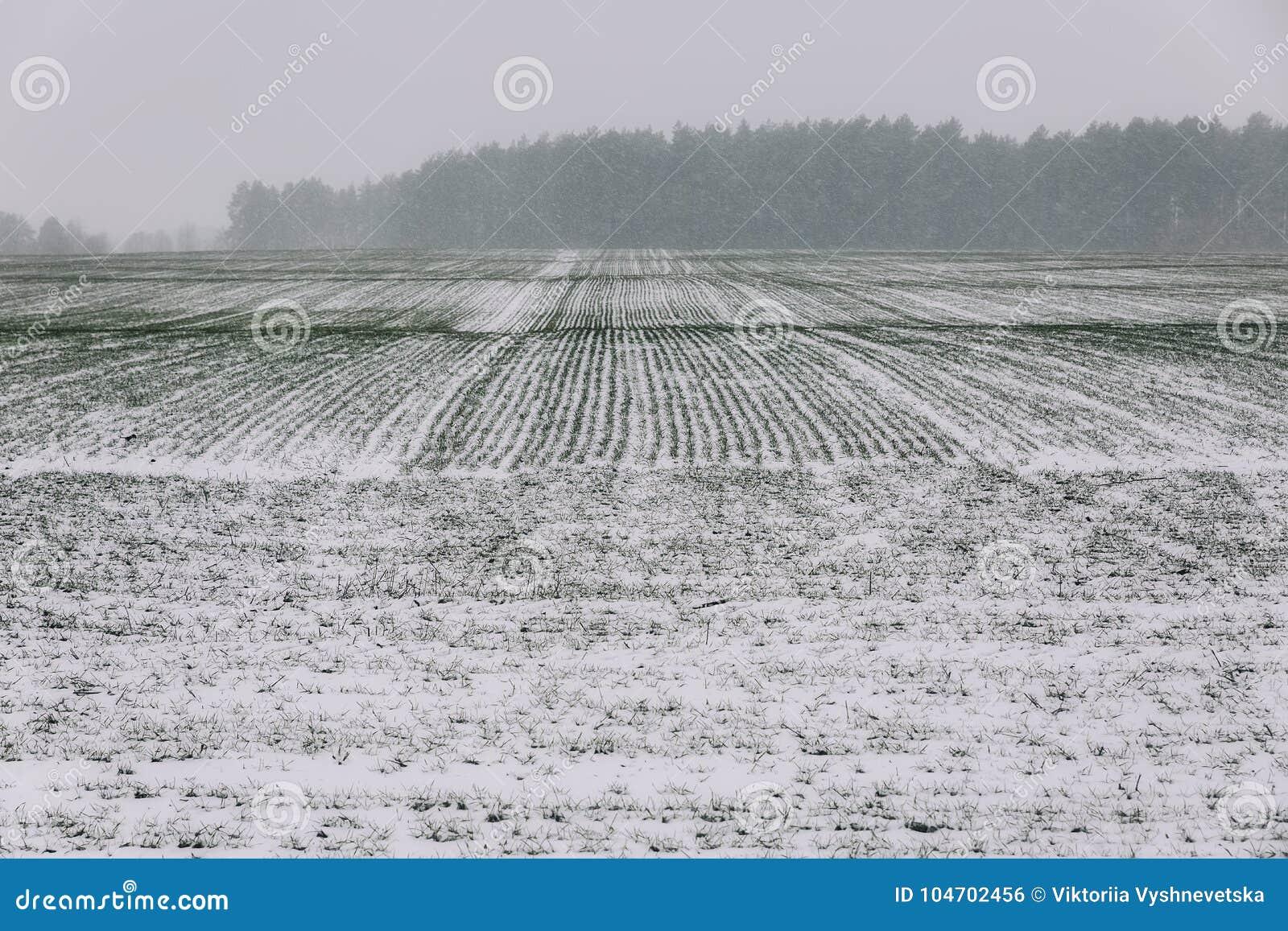 в белом поле по дороге