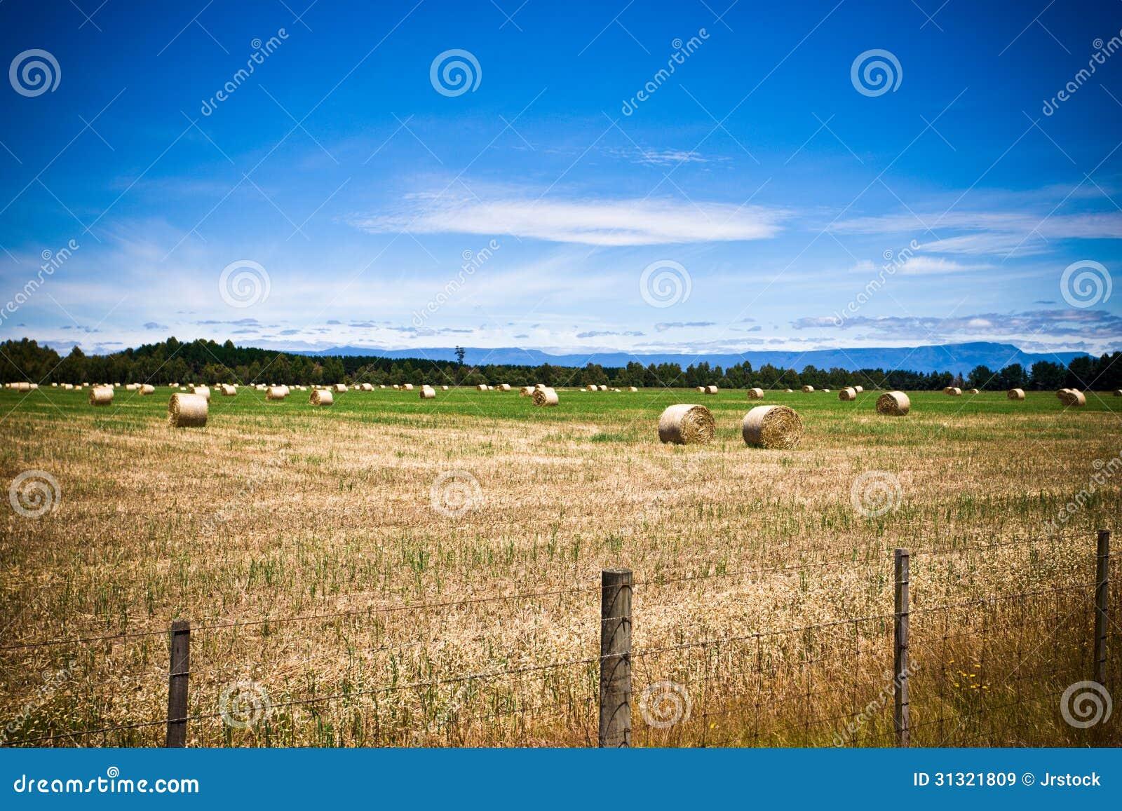 Аграрное поле с круглыми связками сена