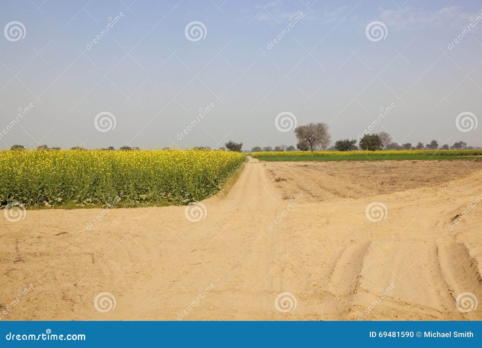 Аграрный ландшафт Раджастхана