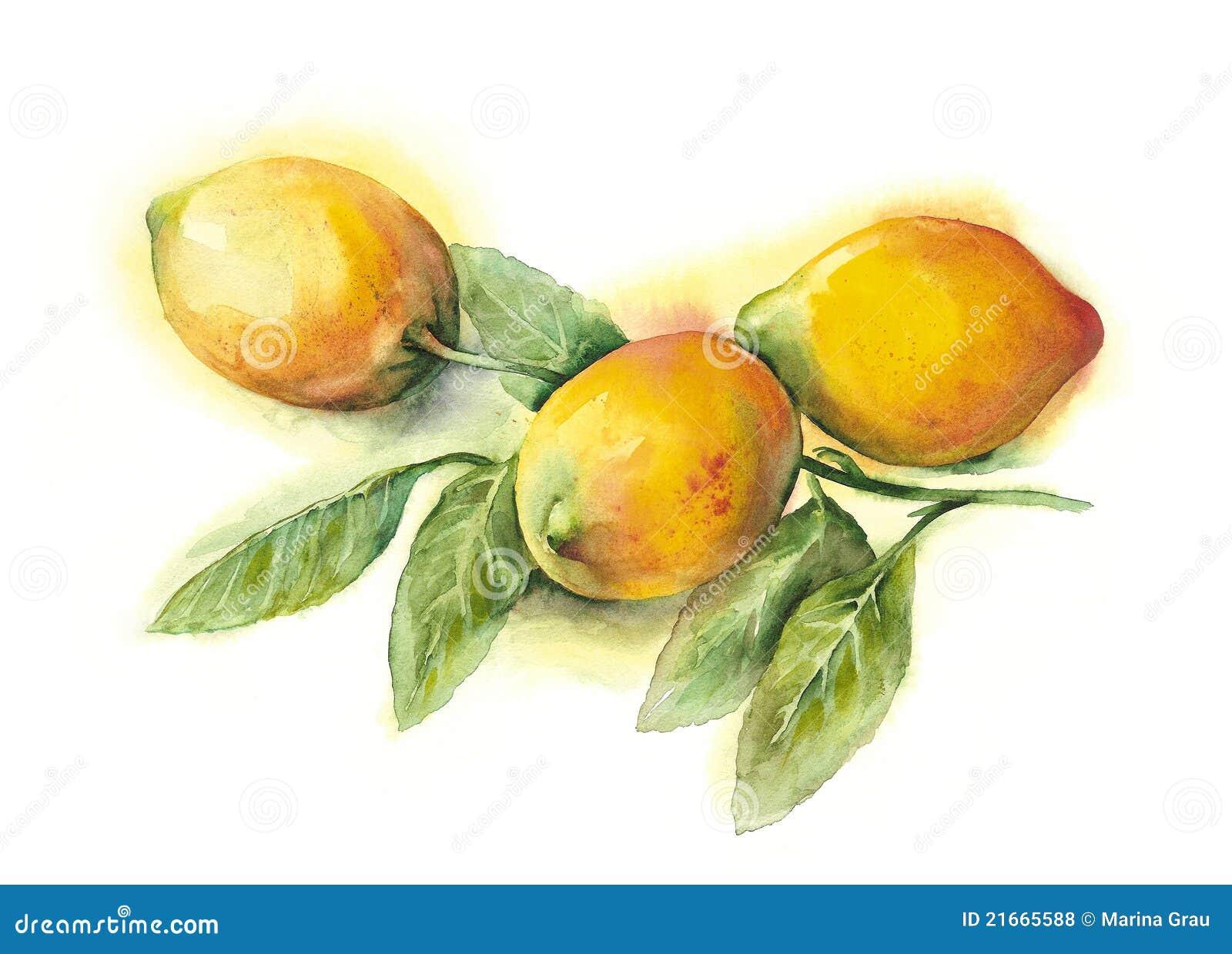 акварель лимонов
