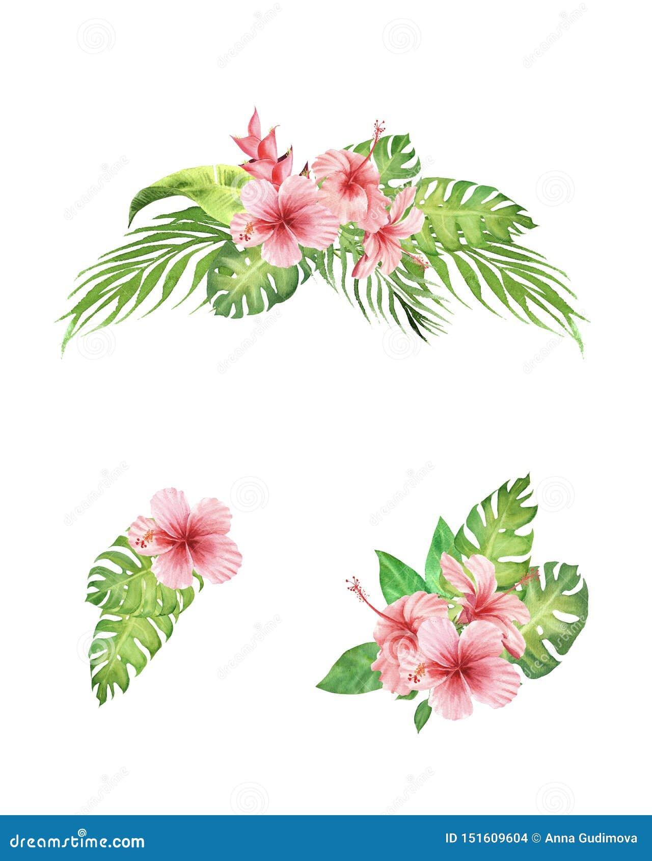 Акварель покрашенная рукой установила тропических цветков гибискуса букета, пальмы и листьев monstera изолированных на белой пред