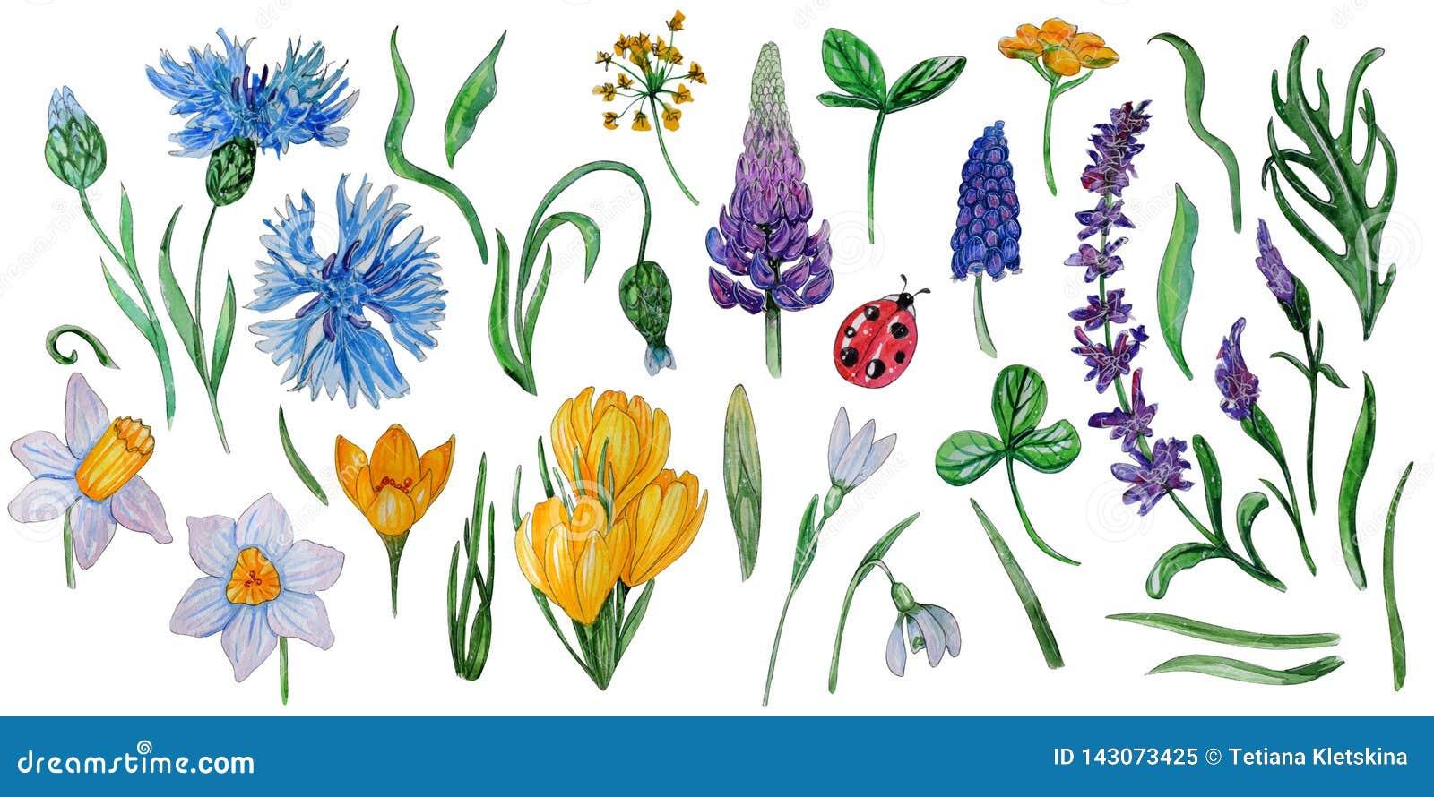 Акварель покрашенная рукой установила цветков весны