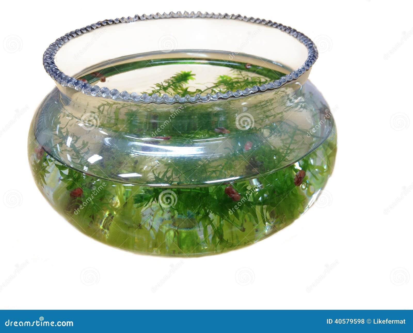 аквариум садка для рыбы