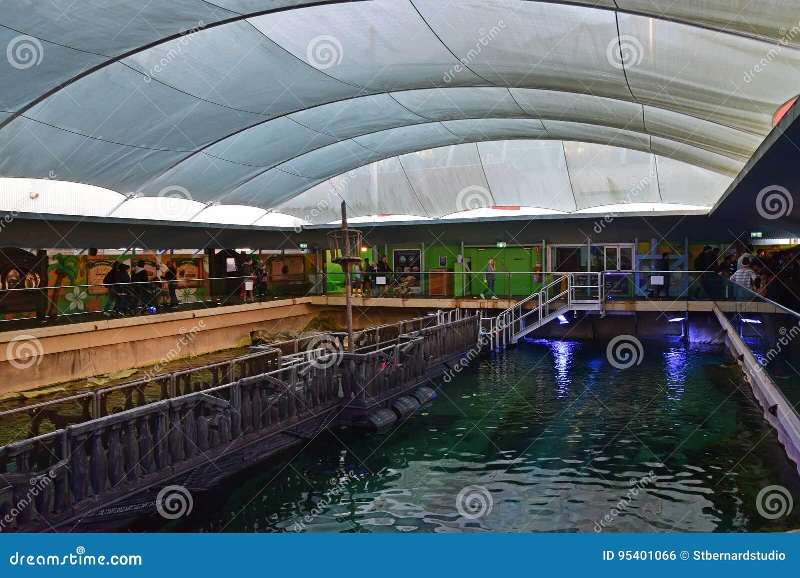 Аквариум Сиднея жизни острова Dugong на море где свинья и Wuru 2 dugongs а именно