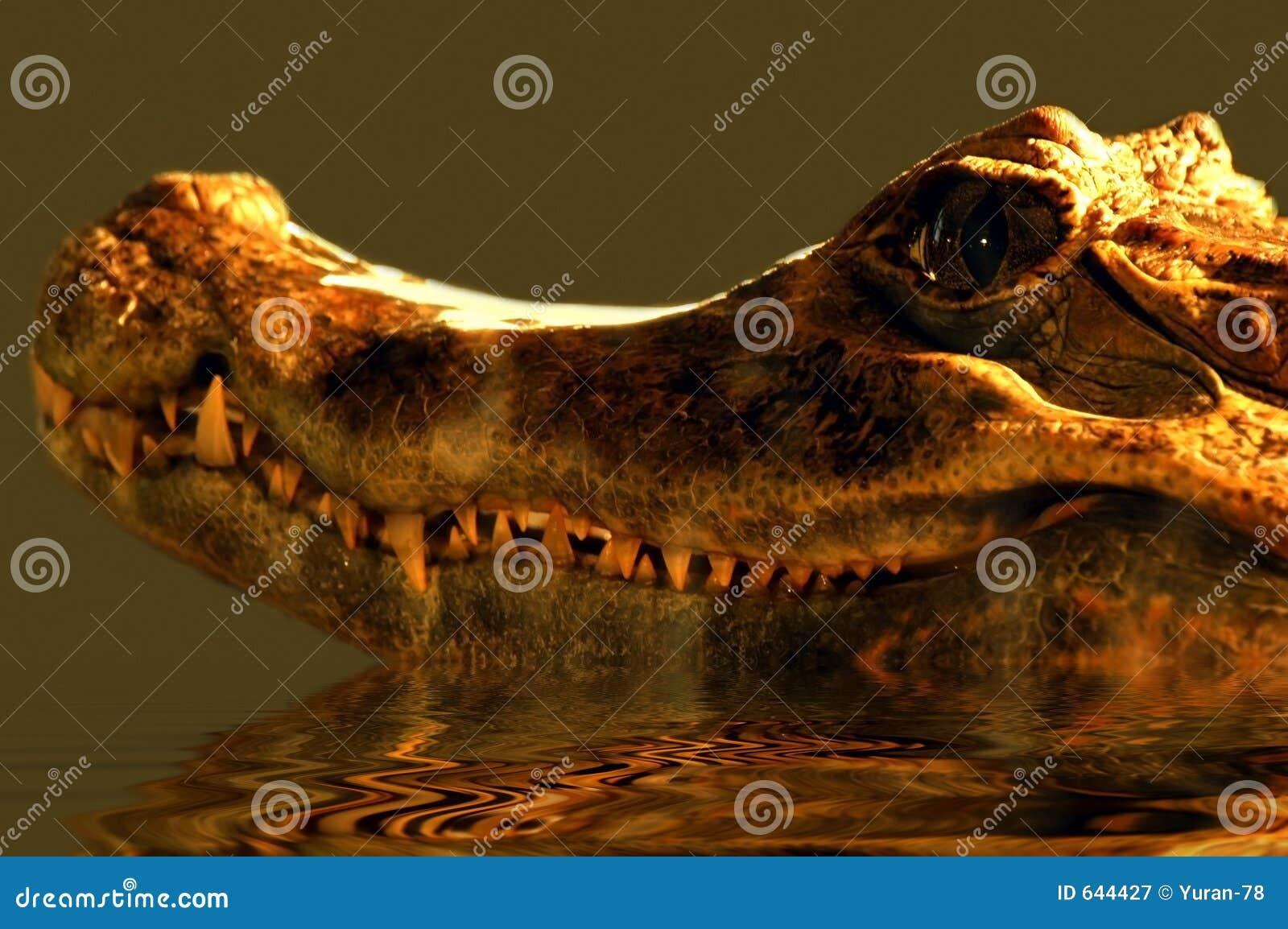 Download аллигатор стоковое изображение. изображение насчитывающей спать - 644427