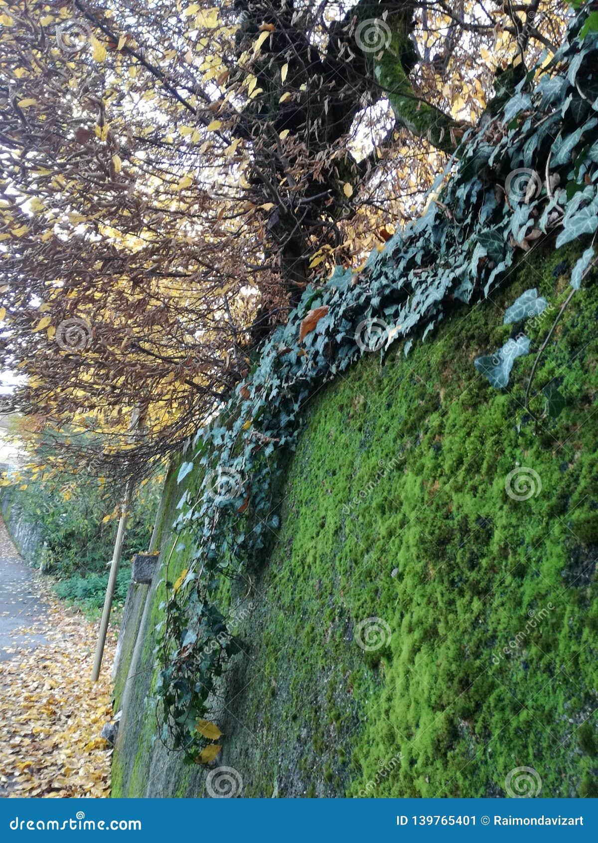 Альпинисты и мох осенью