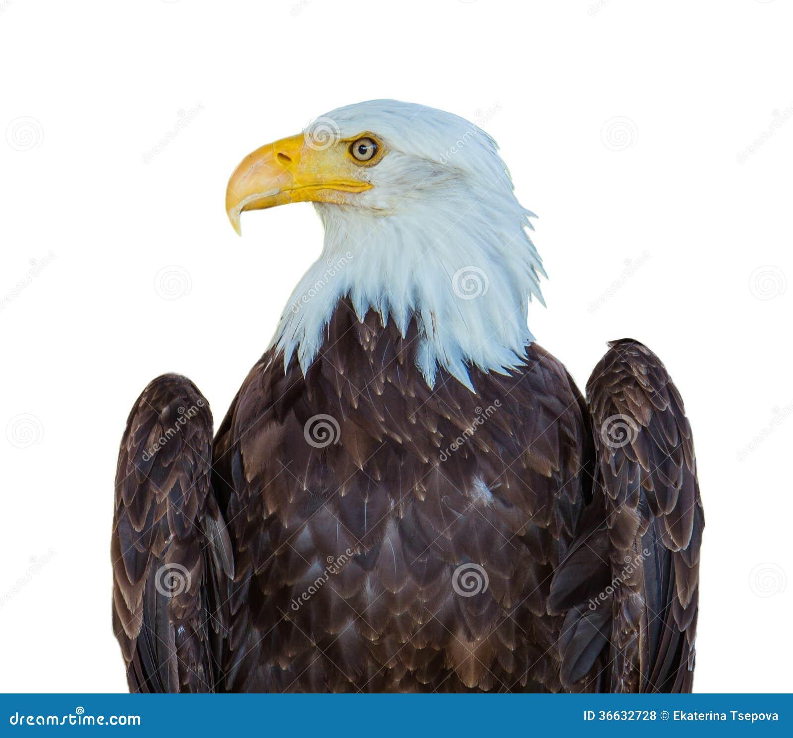 Американский изолированный орел