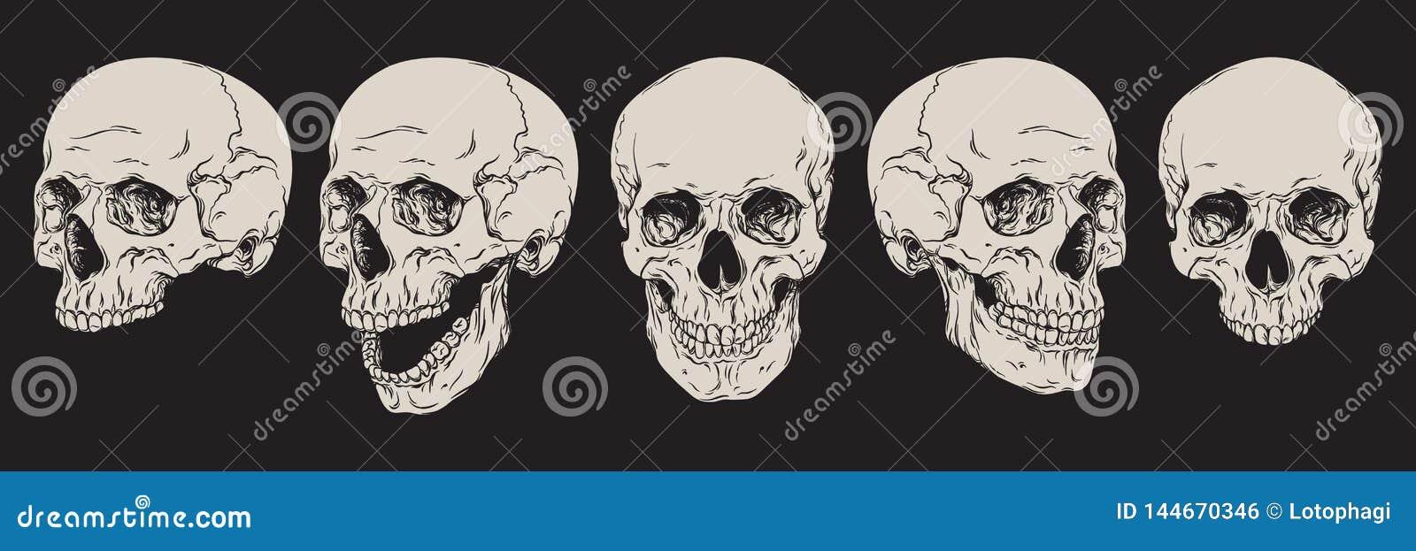 Анатомически правильные человеческие черепа установили изолированный Линия иллюстрация руки вычерченная вектора искусства