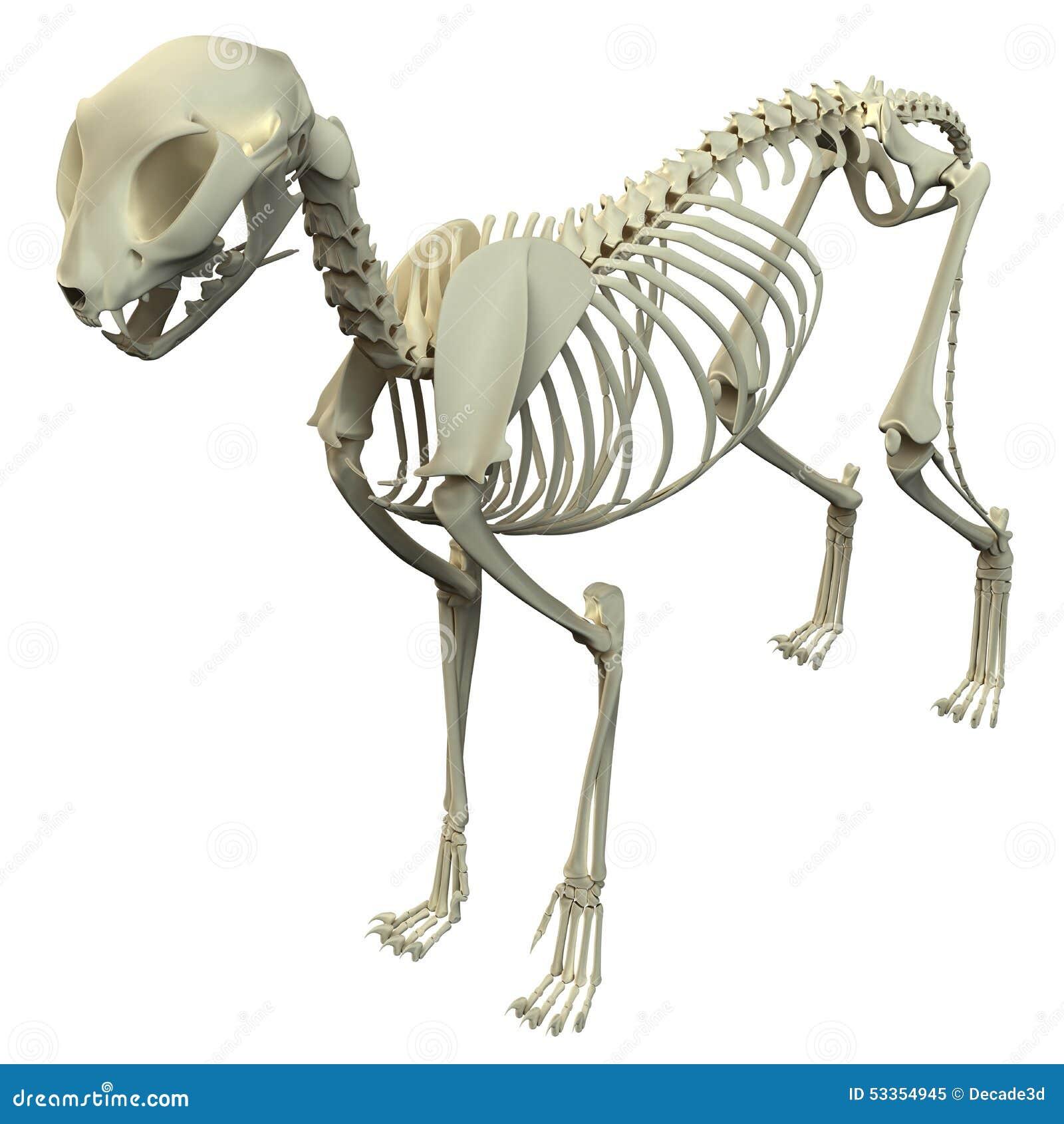 Скелет кота арт