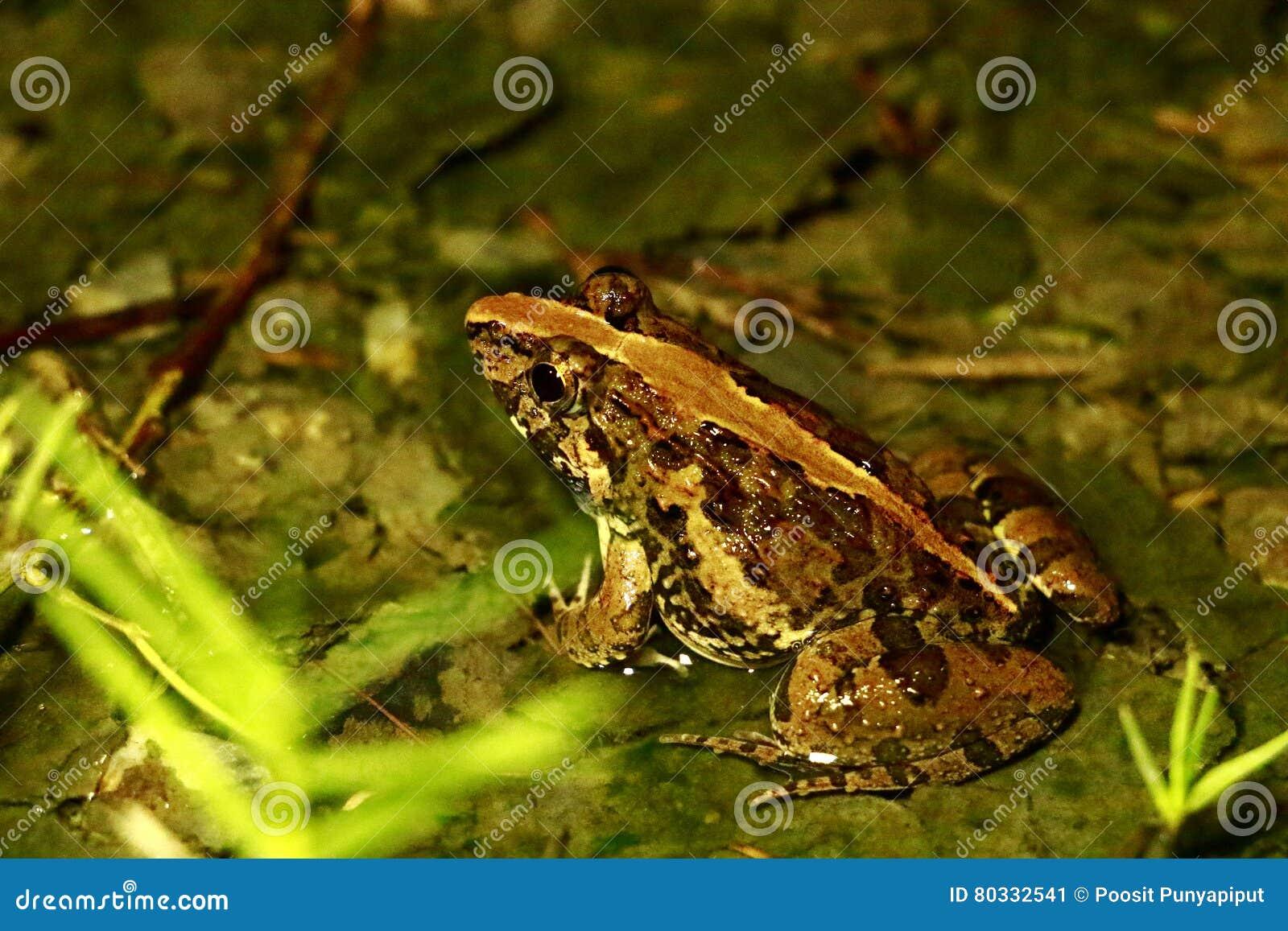 Анатомия лягушек, животных, лодкамиамфибий