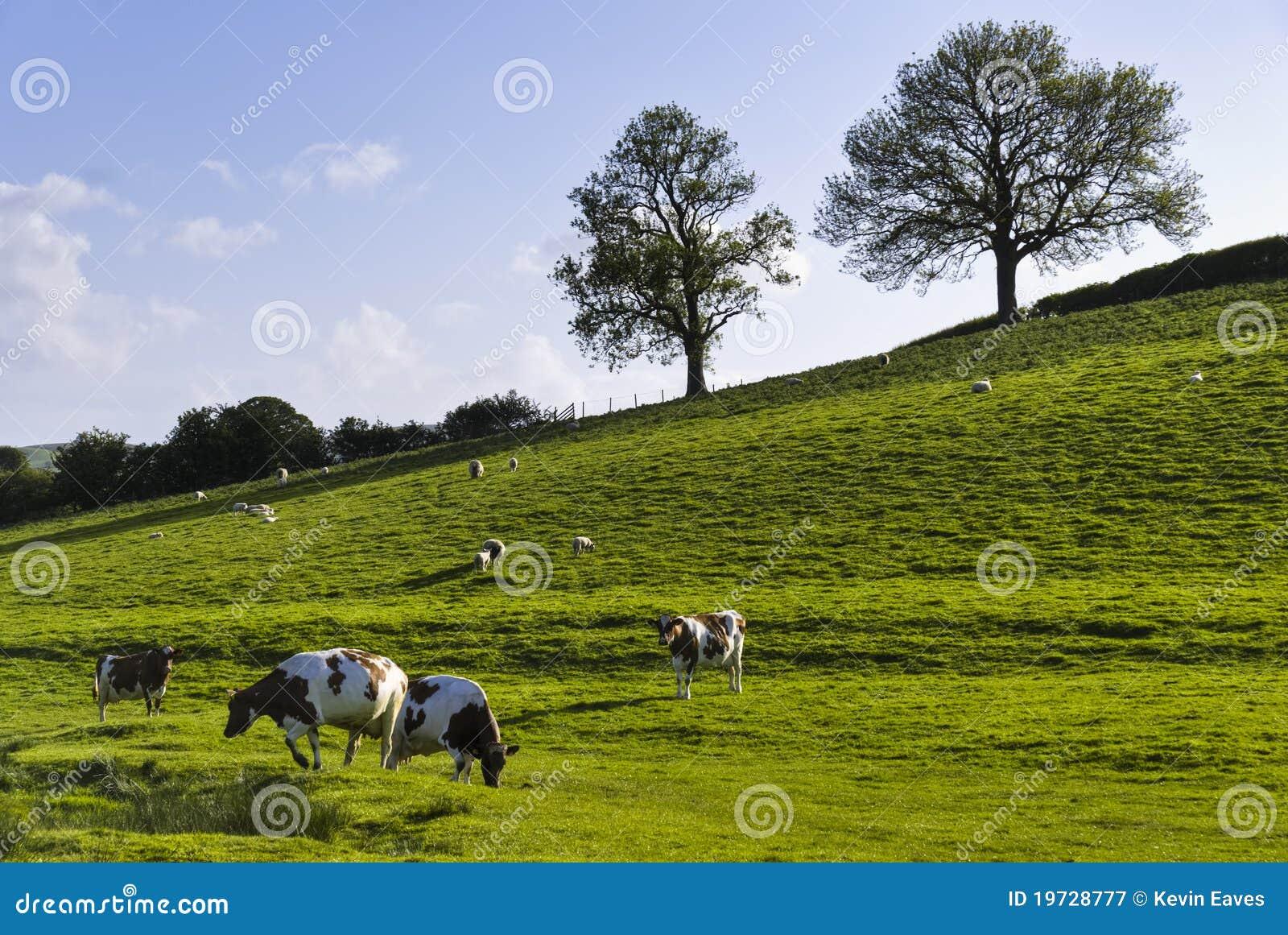 английская весна поля