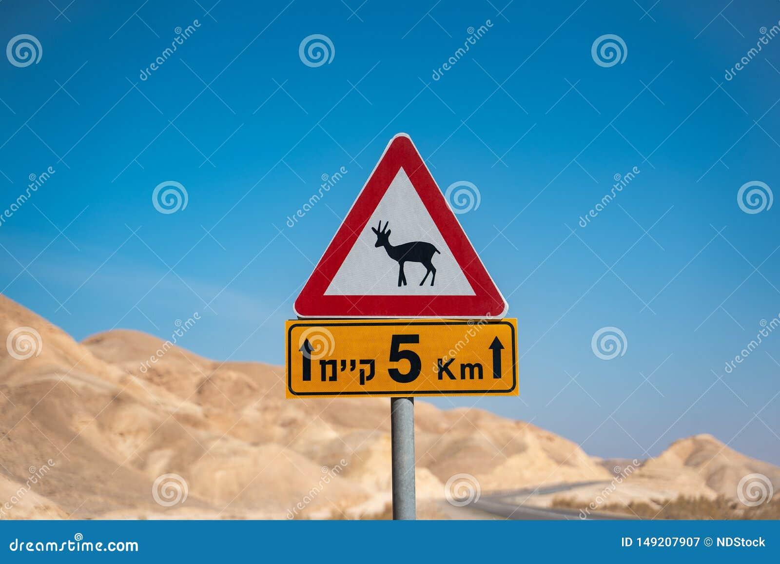 Антилопа подписывает внутри пустыню Израиля пустая дорога