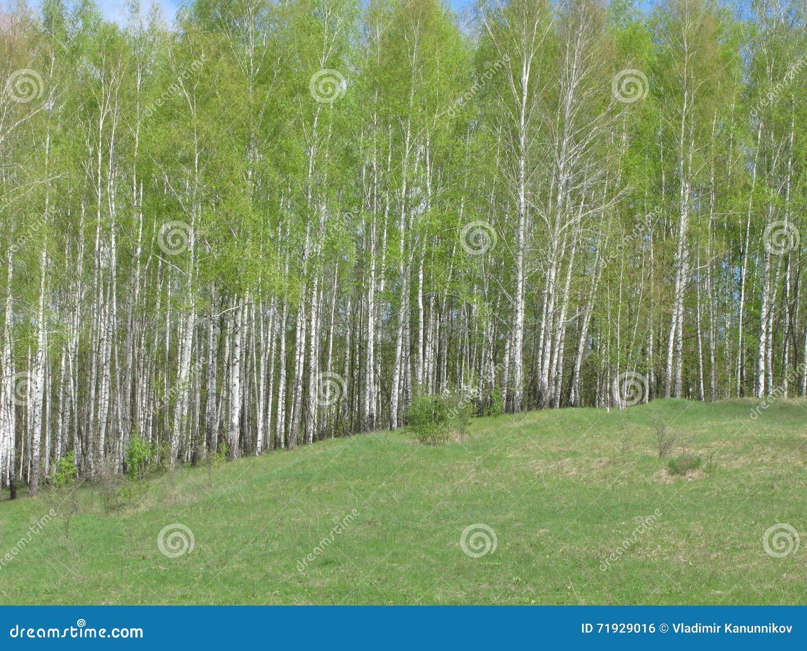 ландшафта фокуса поля дня облаков сини небо выставки заводов движения должного польностью зеленого маленькое не некоторые скачут