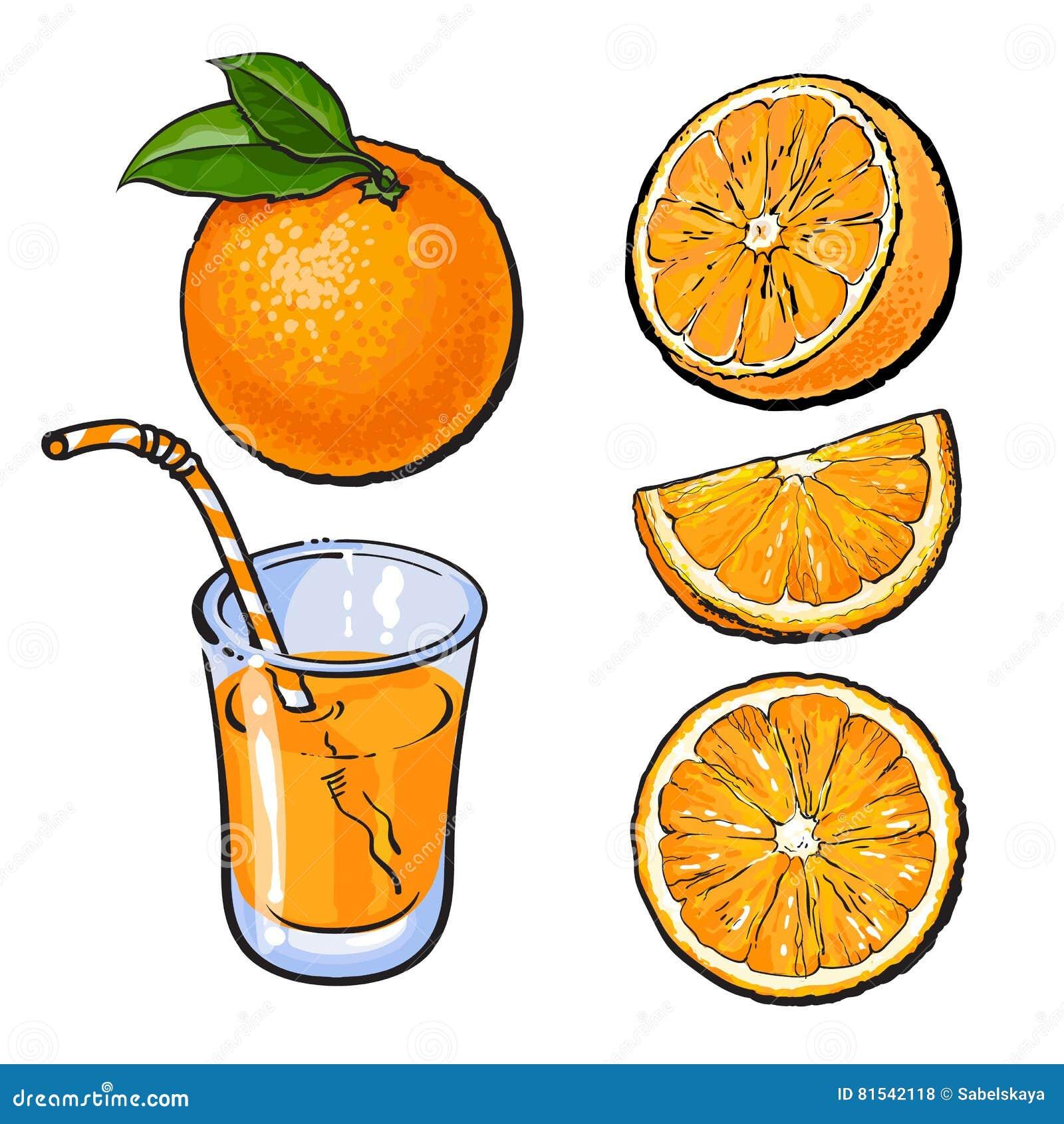 Апельсины и стекло свеже сжиманного сока, эскиза вектора