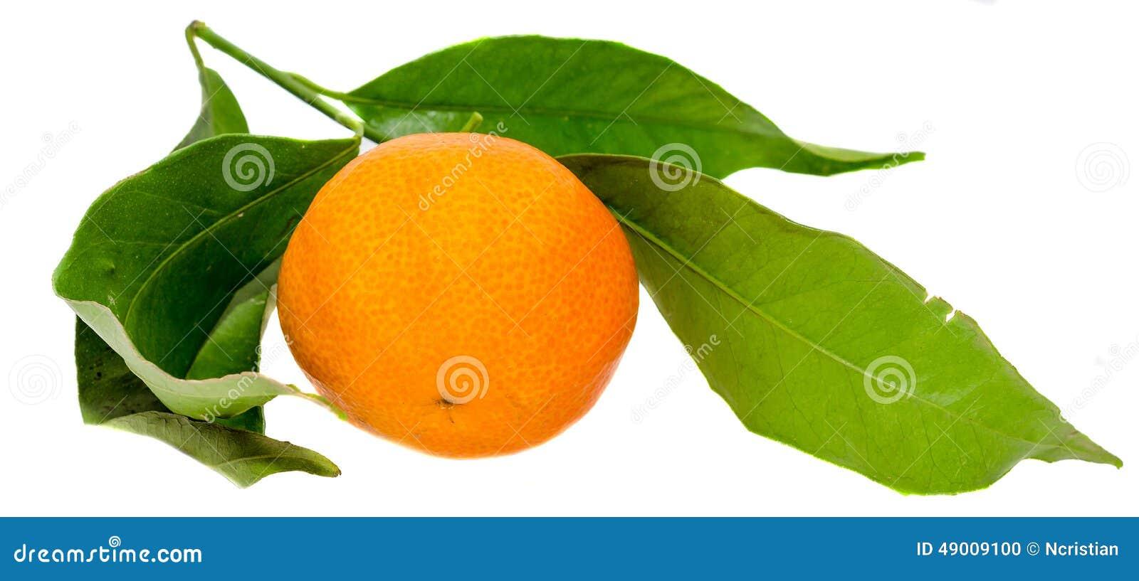 Апельсин мандарина (reticulata цитруса), также известный как мандарин или мандарин, изолированная, белая предпосылка