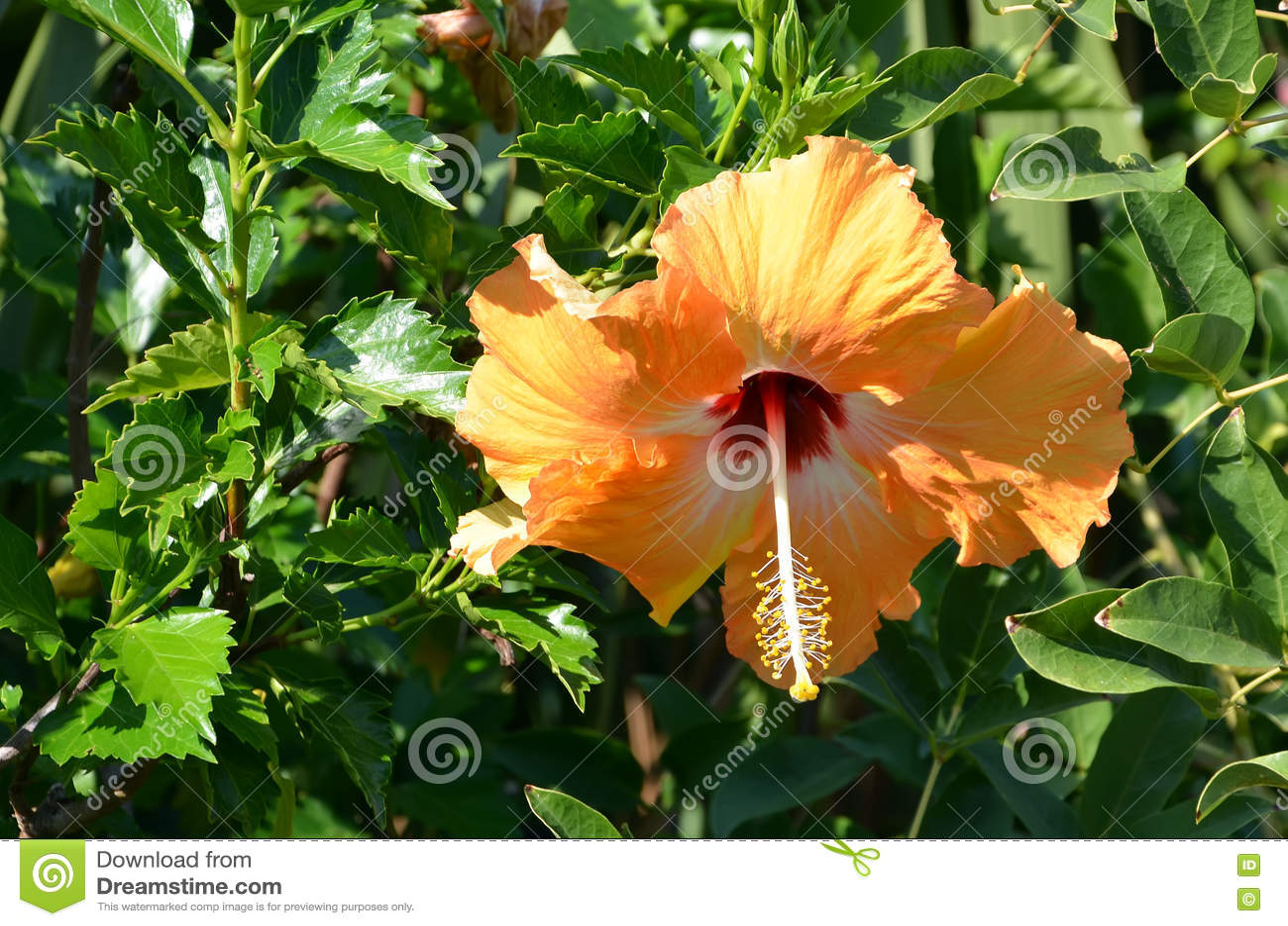 Цветок красоты