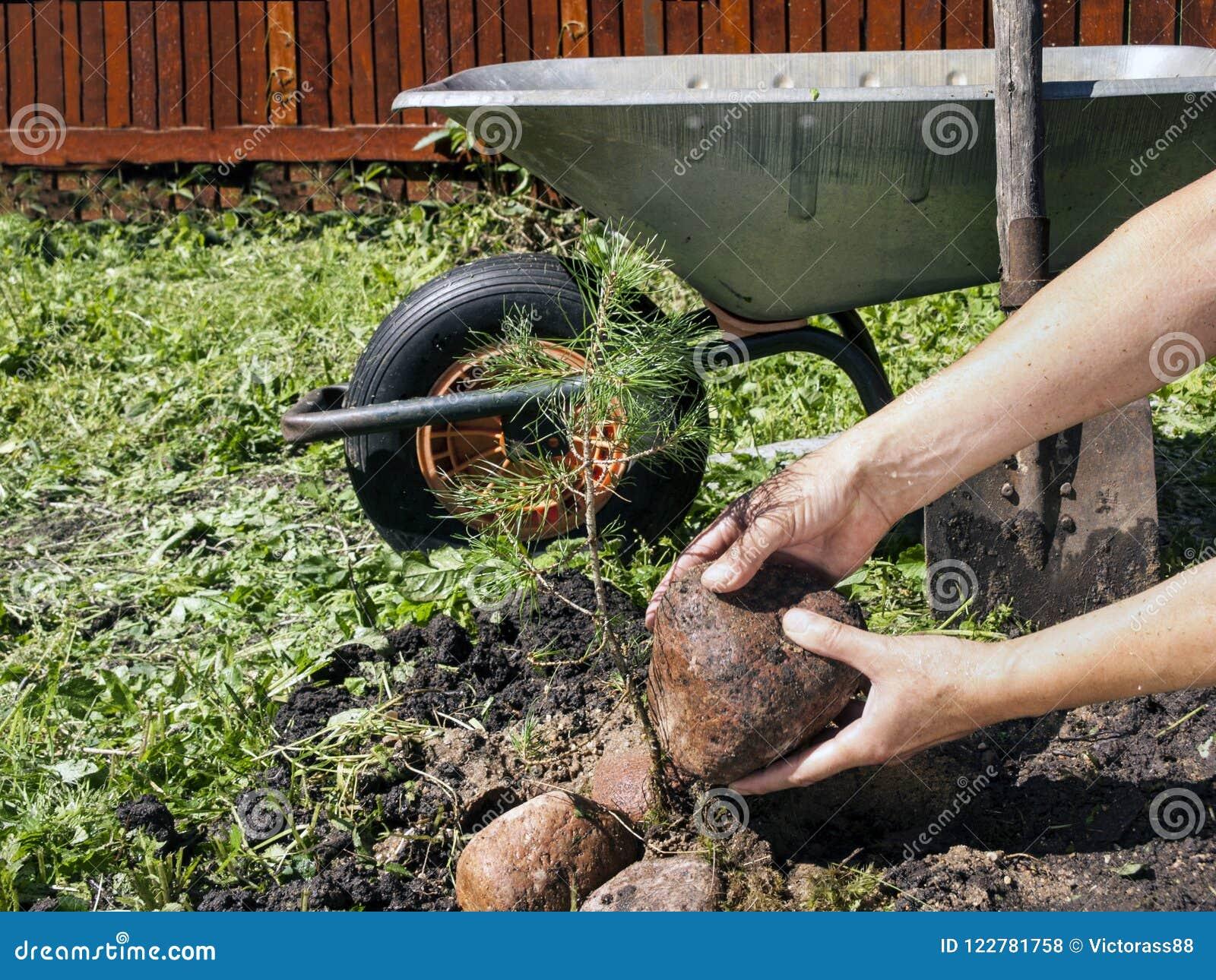 Аранжировать камни в саде