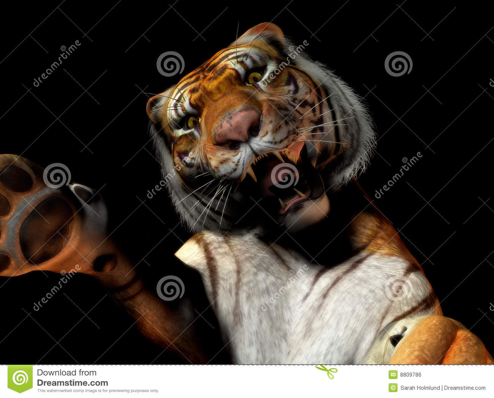 атакуя тигр крупного плана