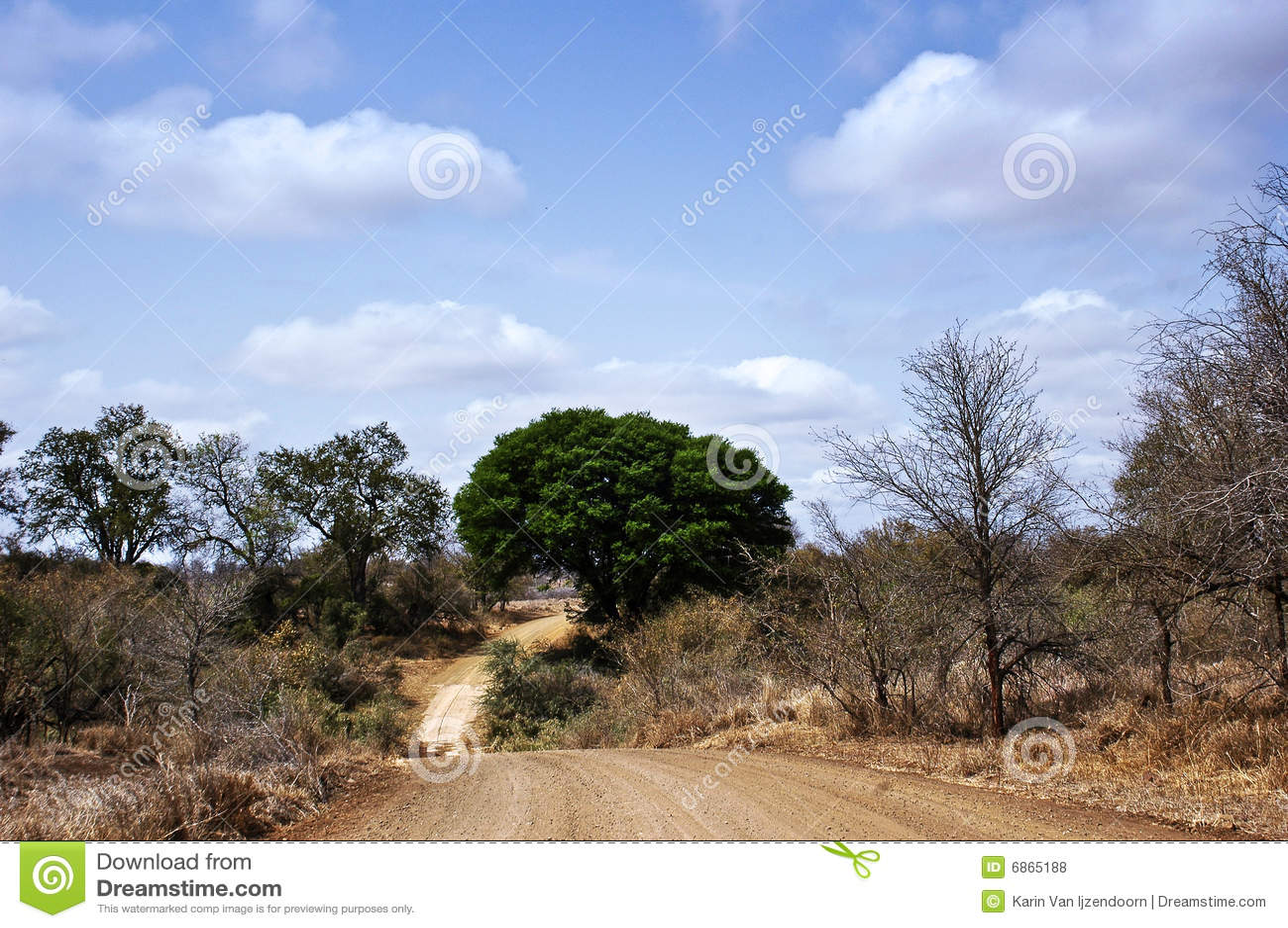 африканская дорога bush