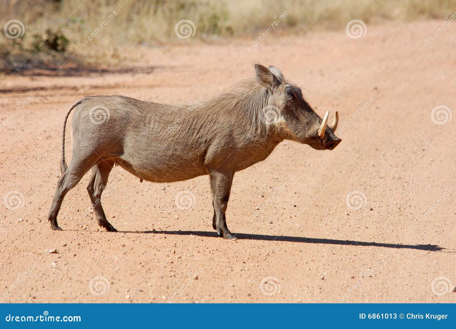 африканская живая природа warthog