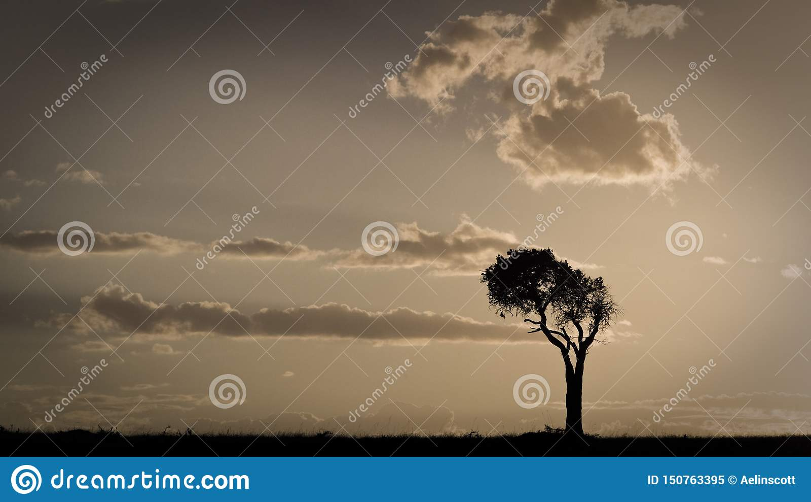 Африканский заход солнца с одиночным деревом Maasai Mara, Кения