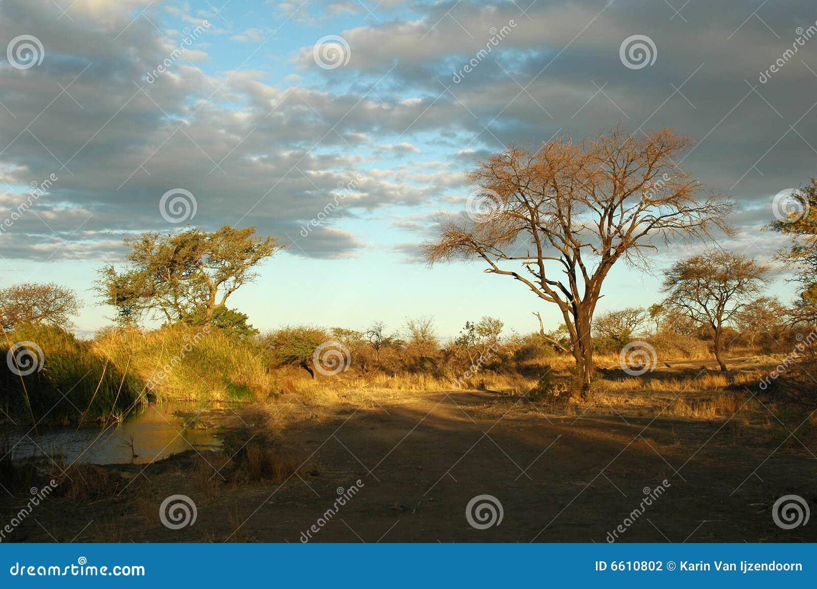африканский ландшафт bush
