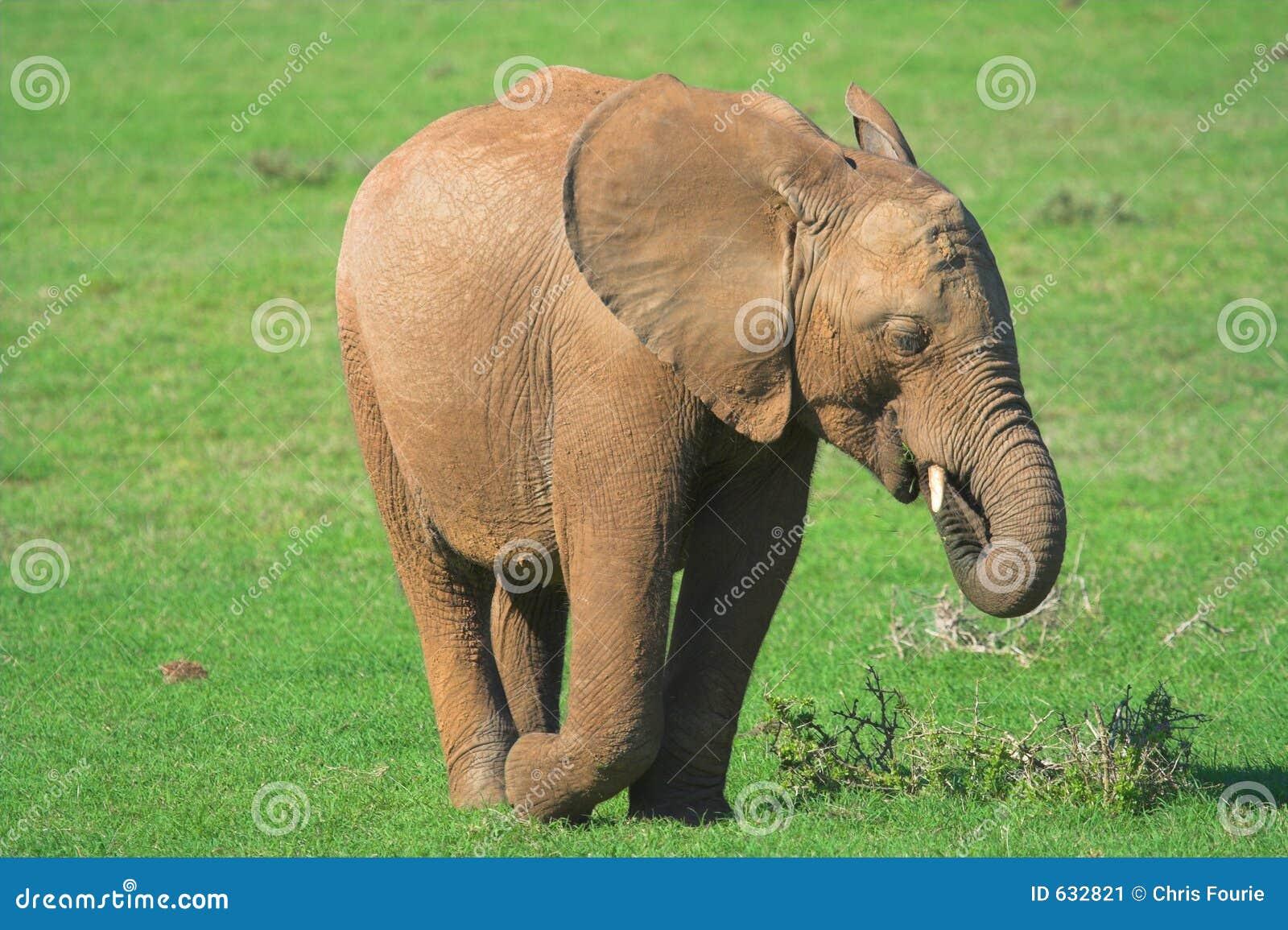 Download африканский слон стоковое изображение. изображение насчитывающей игра - 632821