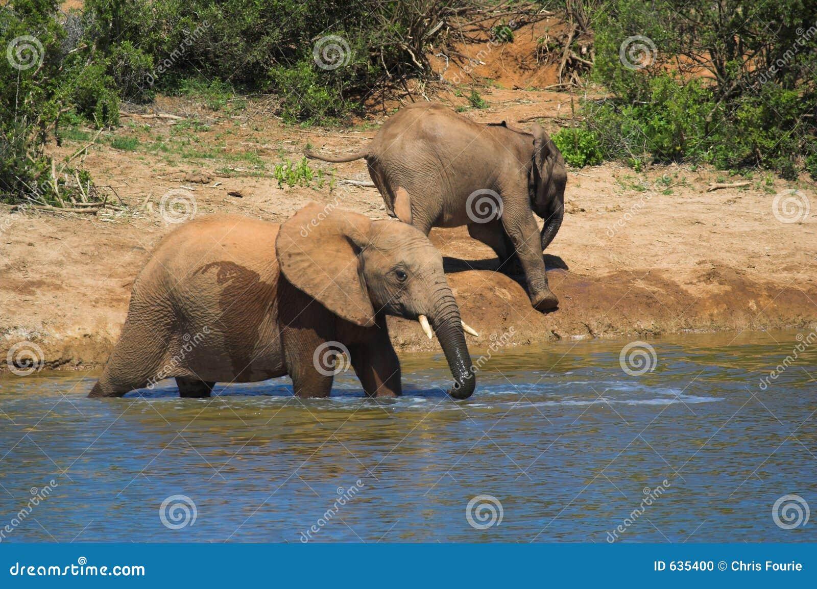 Download африканский слон стоковое фото. изображение насчитывающей парки - 635400