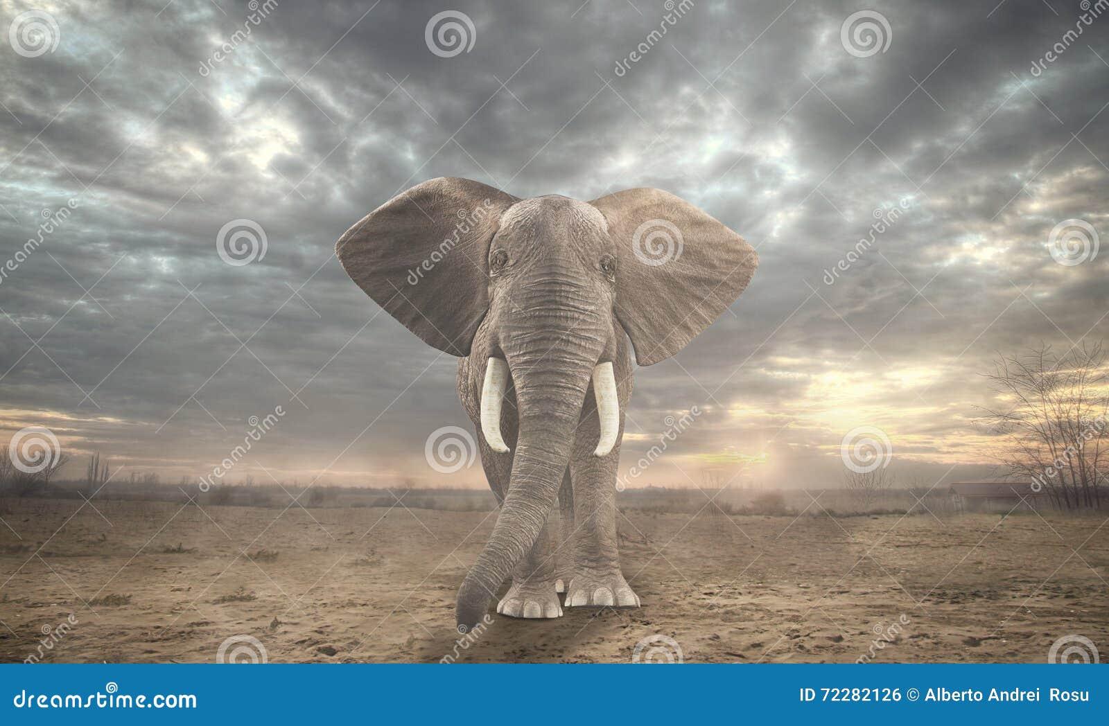Download африканский слон стоковое фото. изображение насчитывающей парк - 72282126