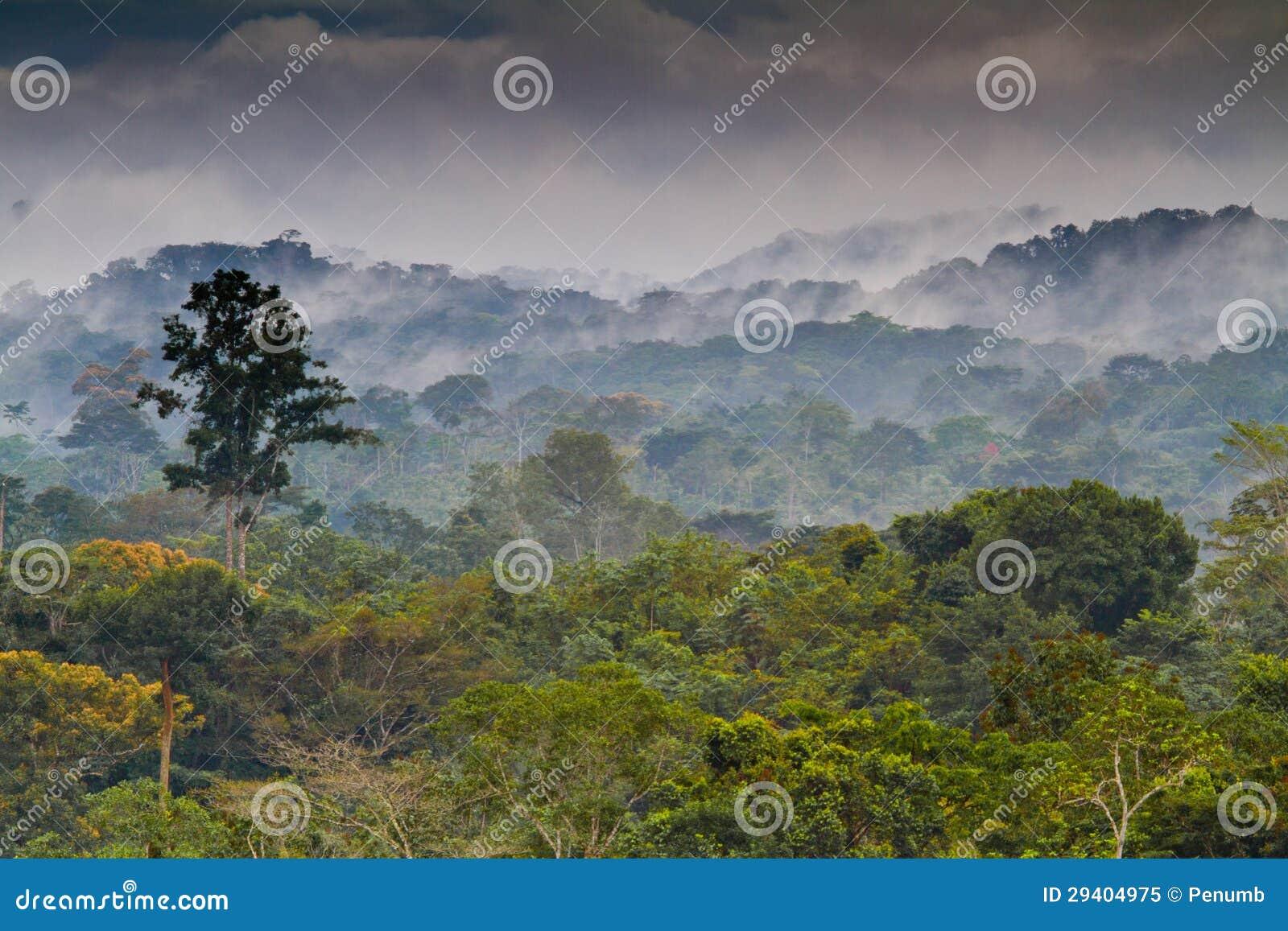 Африканский тропический лес